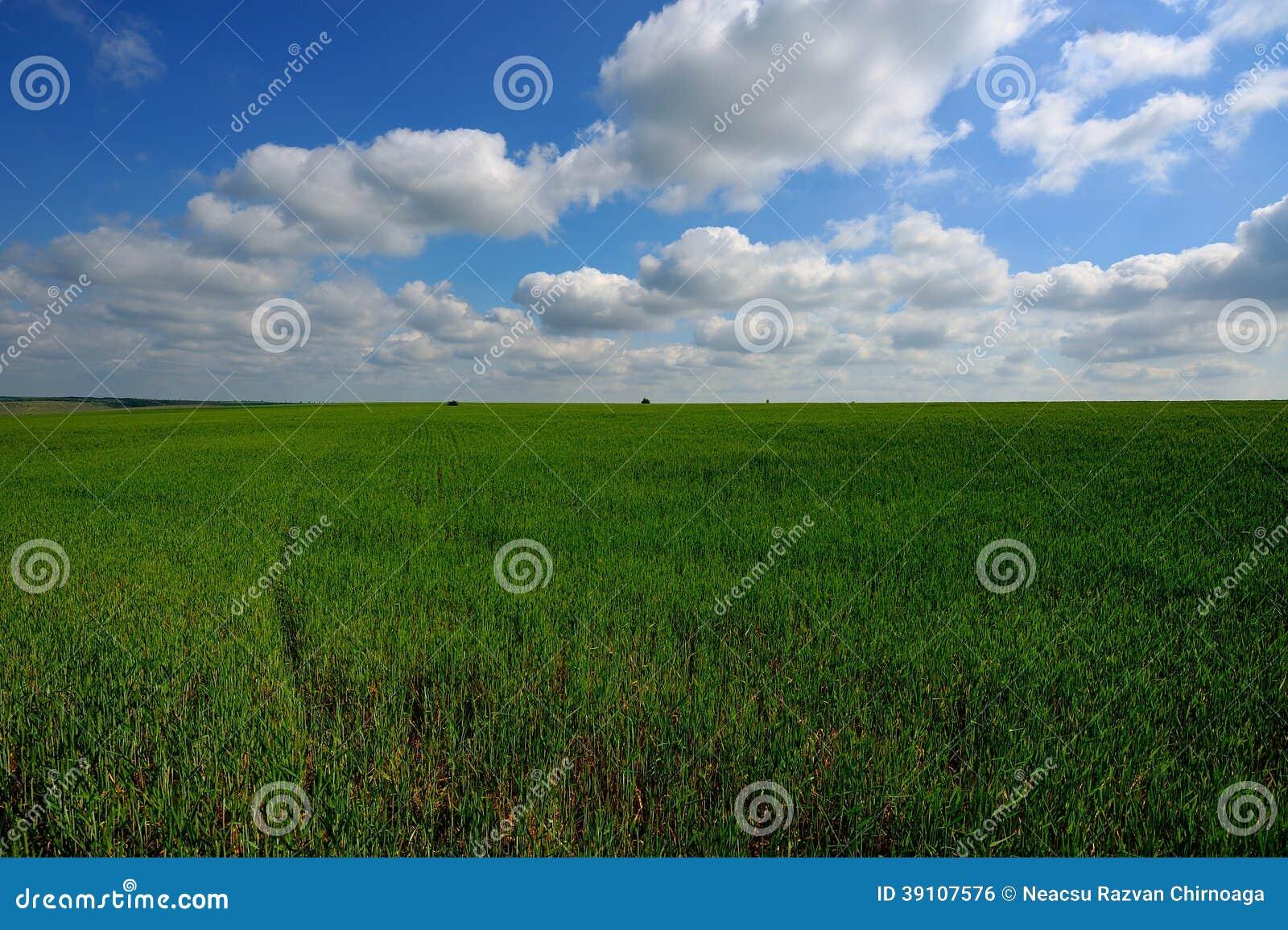 Groen gebied en blauwe hemel