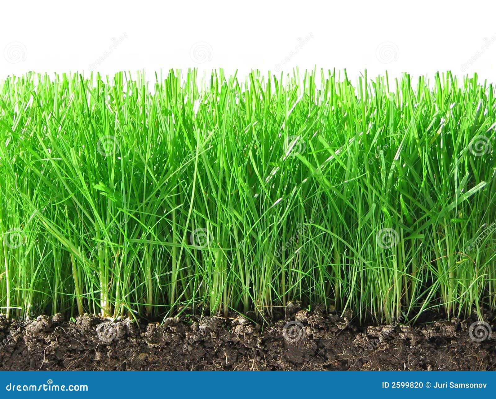 Groen gras.