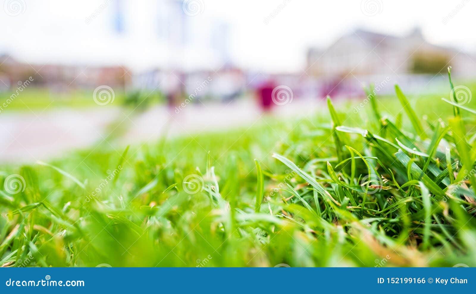 Groen gras, Close-up geschotene stemmingsfoto