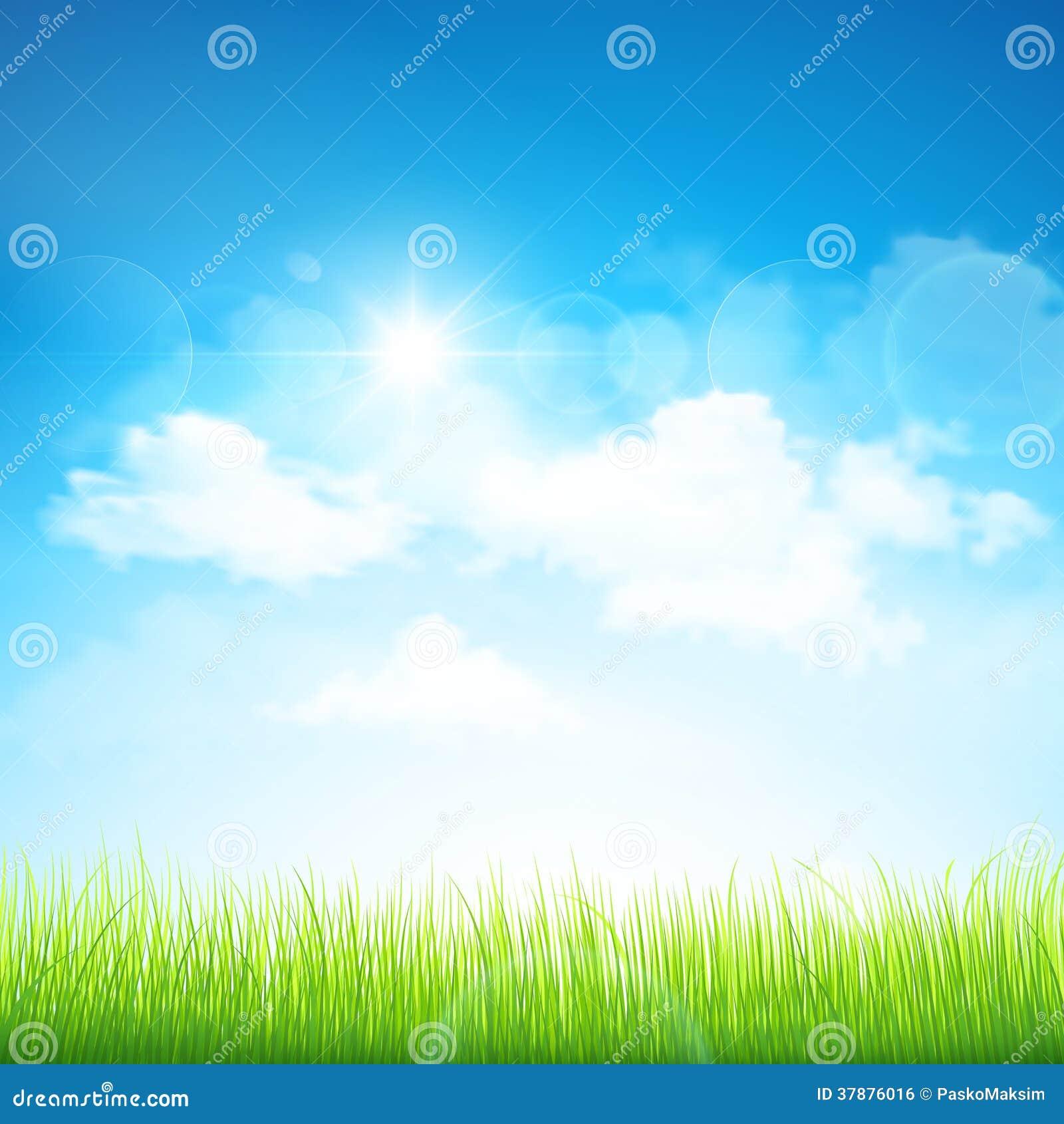Groen gras en blauwe hemel
