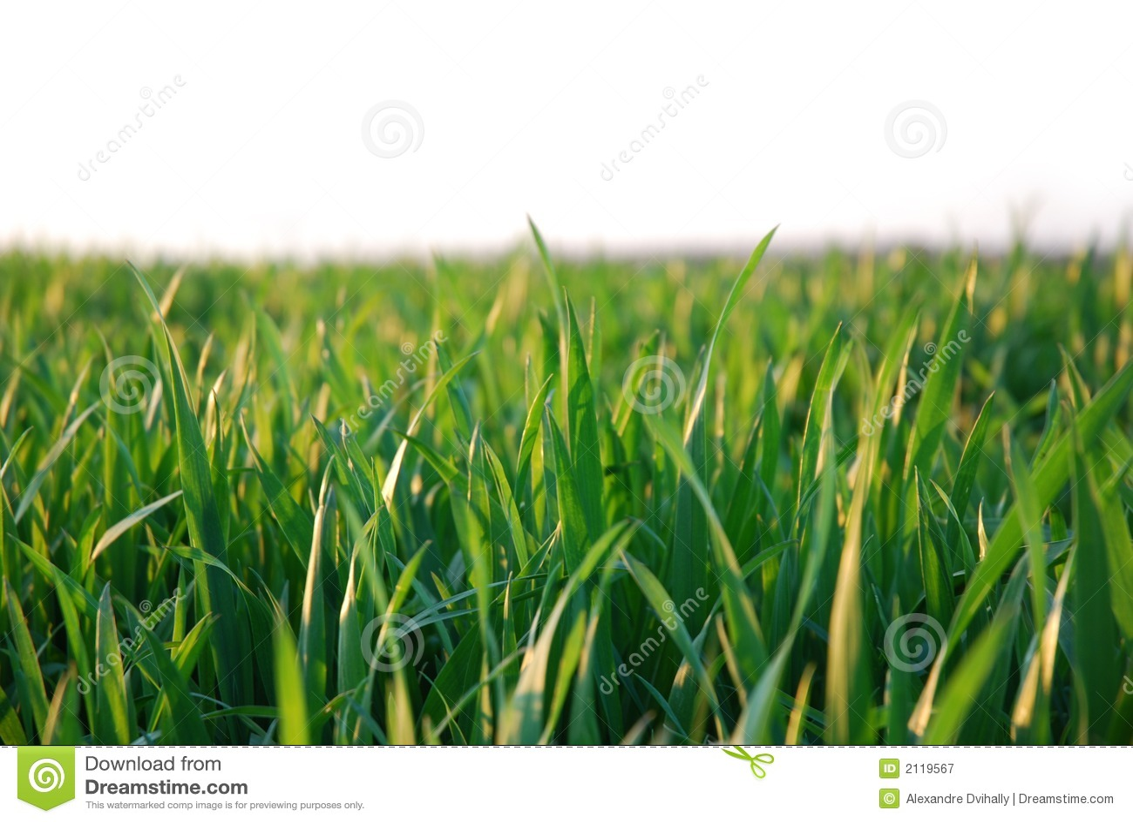 Groen gras, witte achtergrond royalty vrije stock fotografie ...
