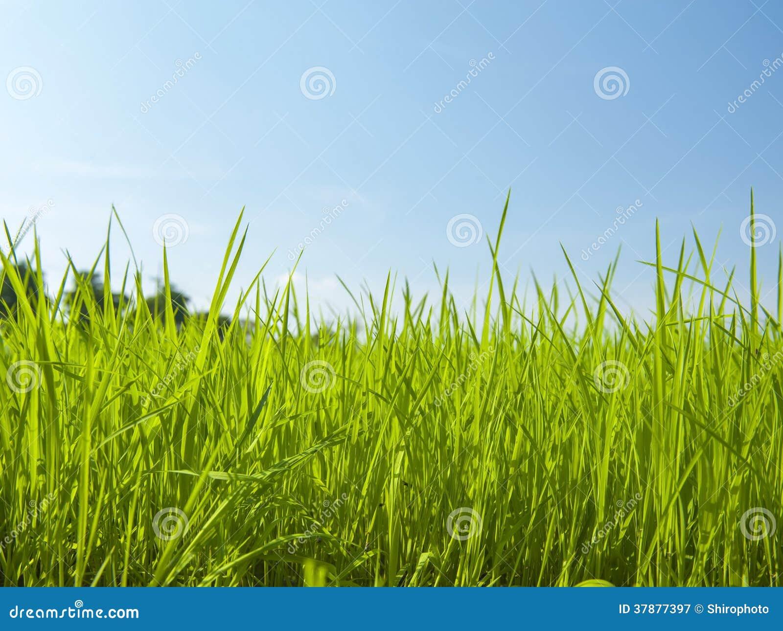 Groen grasgebied