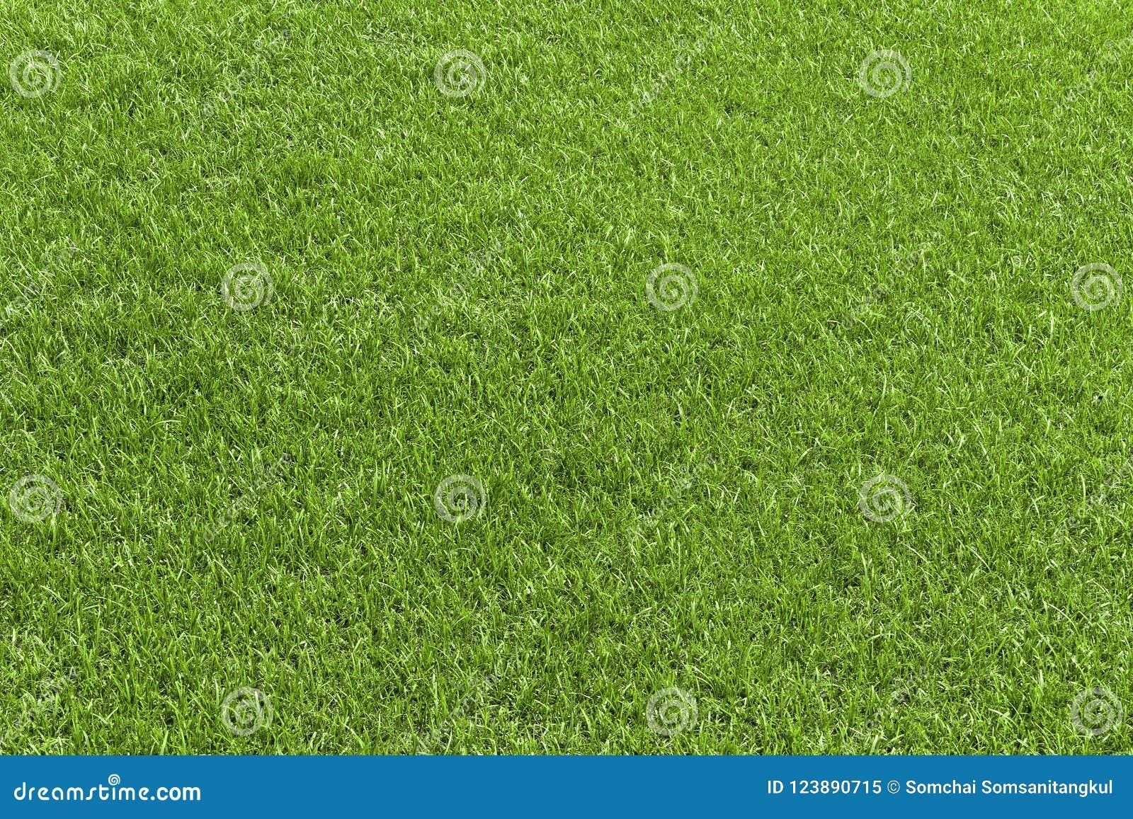 Groen grasgebied, groen lawbgoed voor textuur en achtergrond