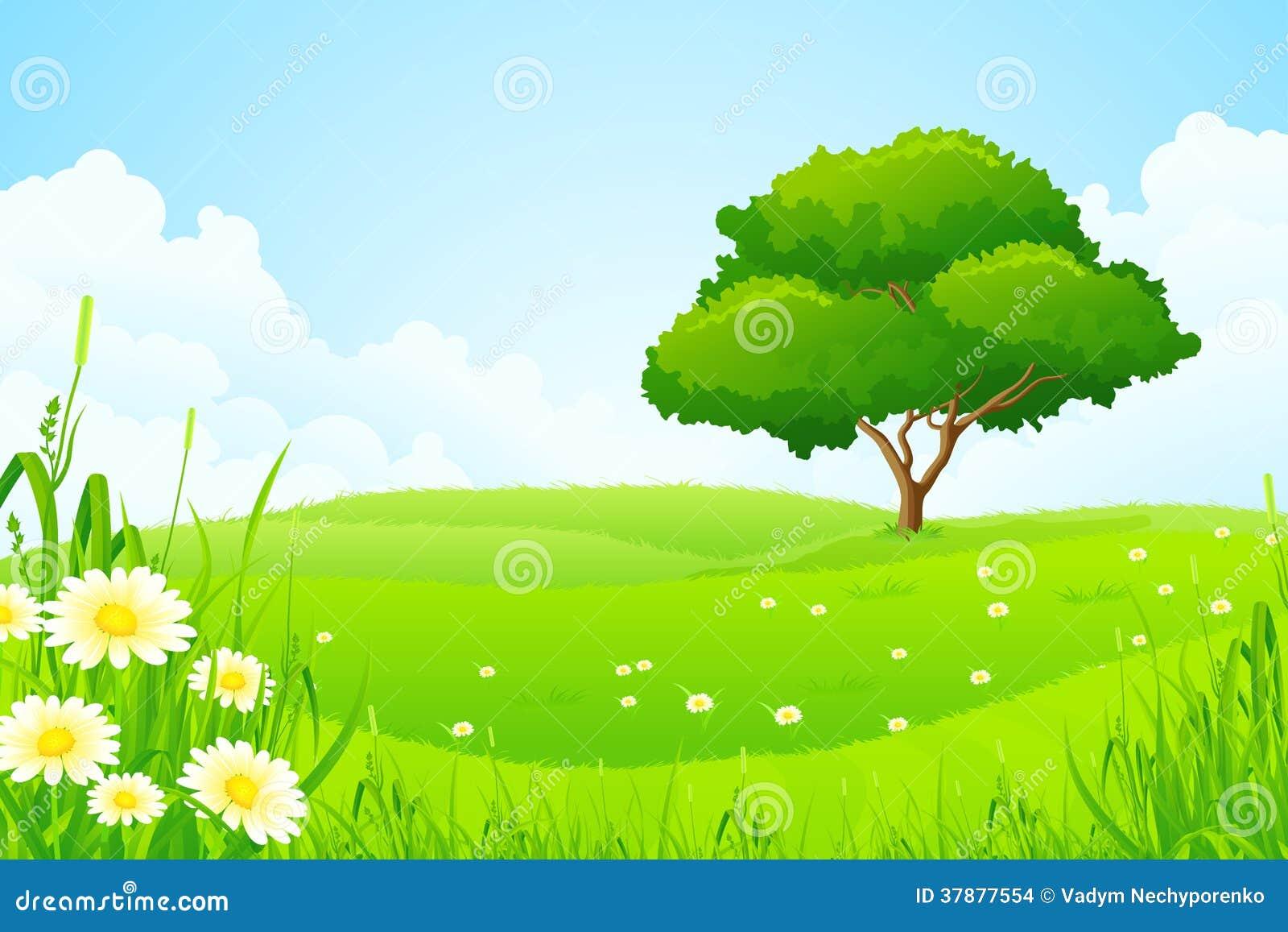 Groen Landschap met Boom