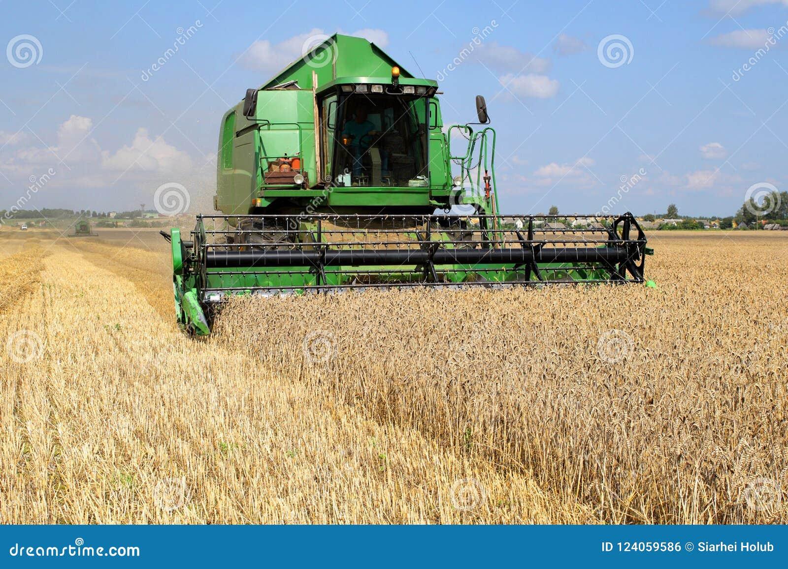Groen maaidorser verwijdert tarwe uit het gebied op een zonnige dag