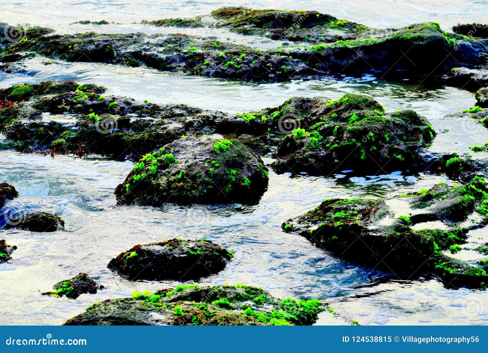 Groen mos op de rotsen van een strand