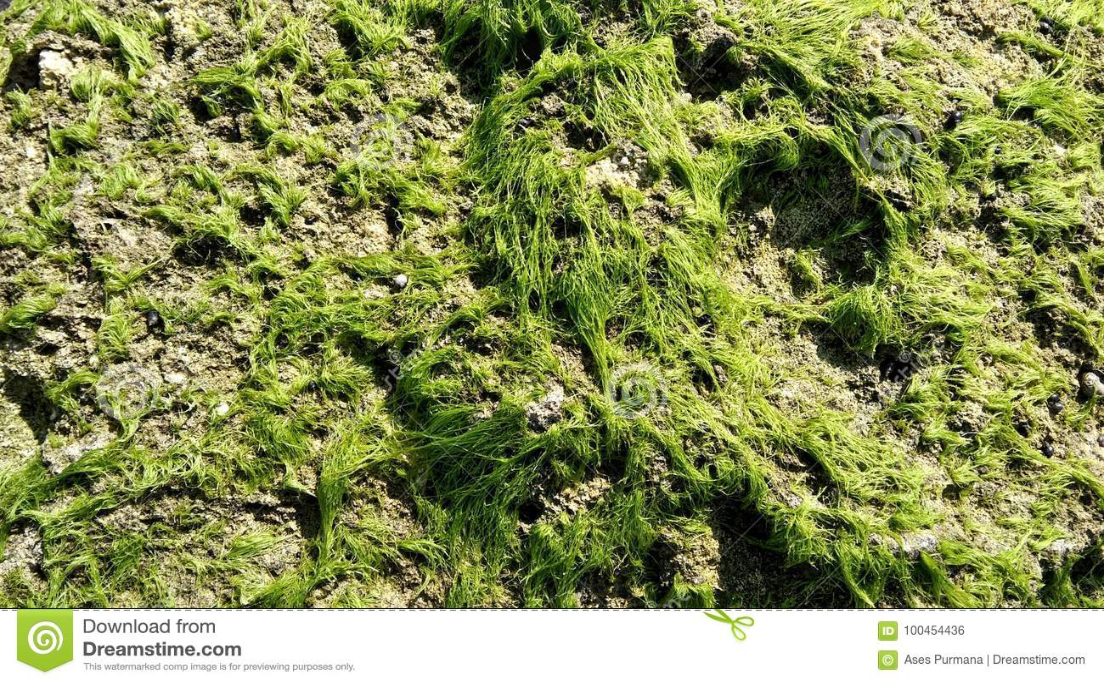 Groen onkruid