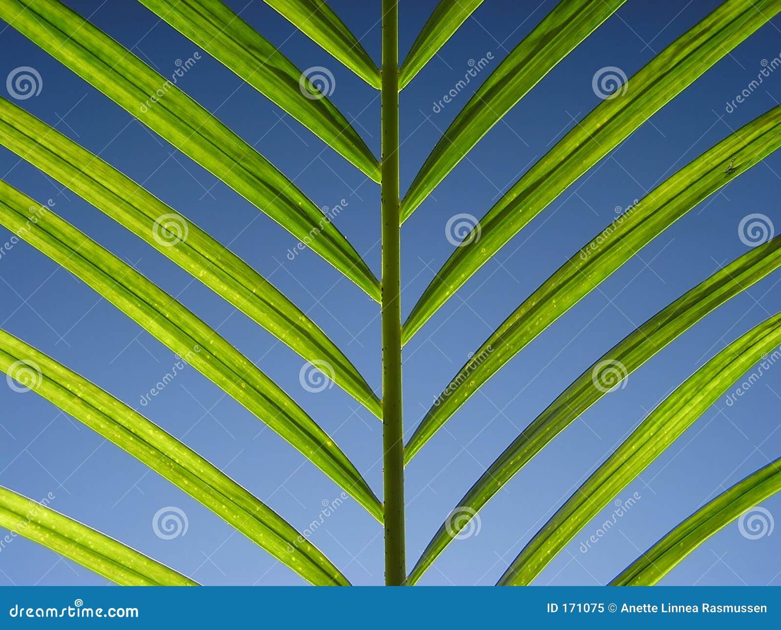 Groen op blauw