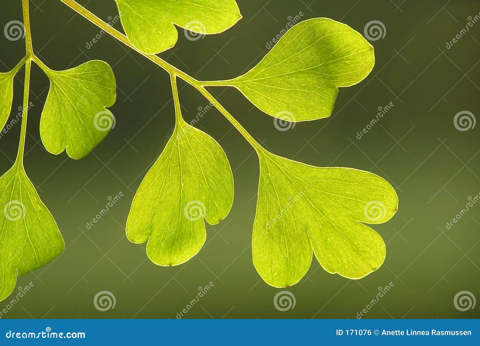 Groen op groen