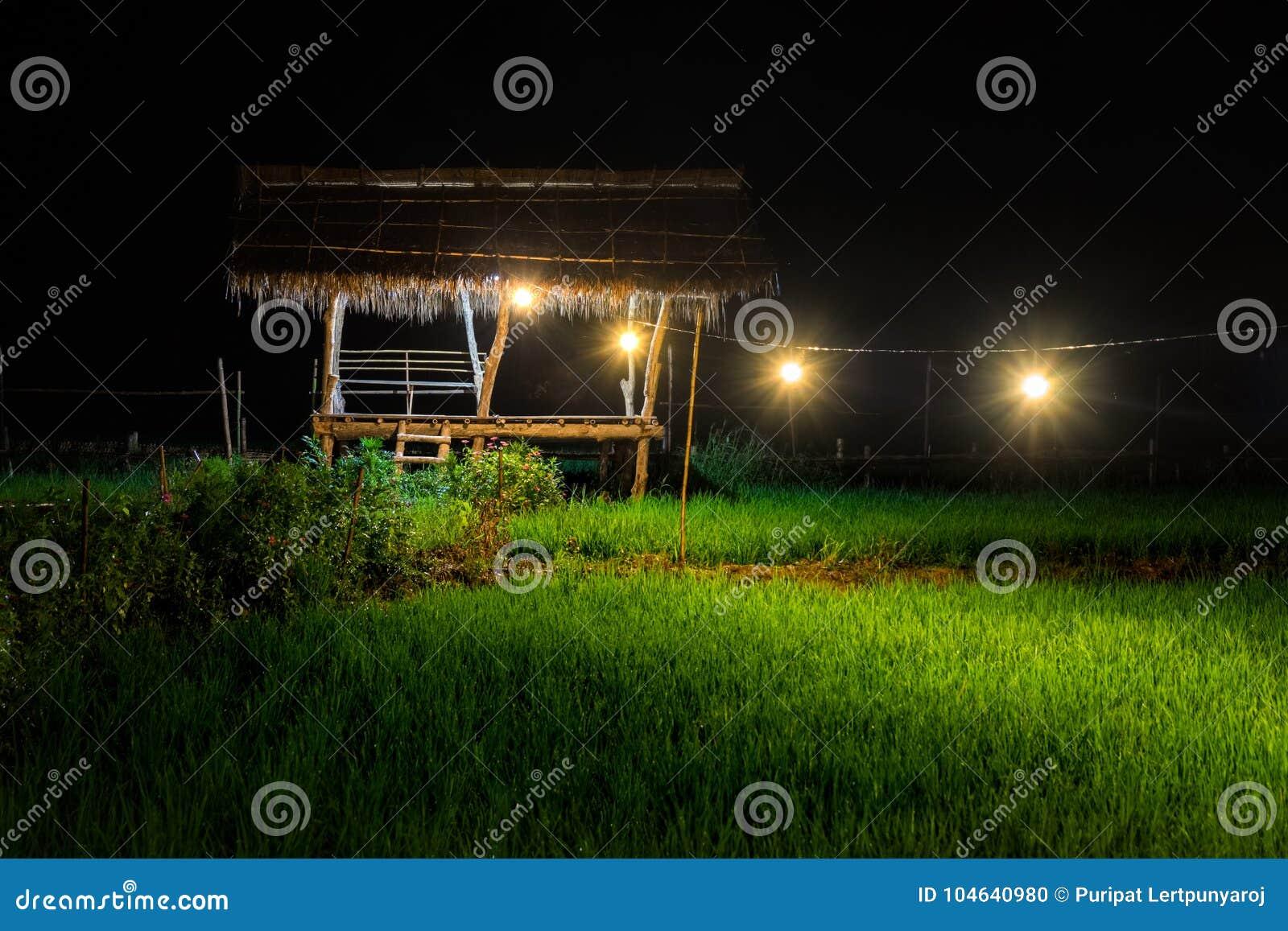 Download Groen Padieveld In Nan Province, Thailand Stock Foto - Afbeelding bestaande uit toneel, nave: 104640980