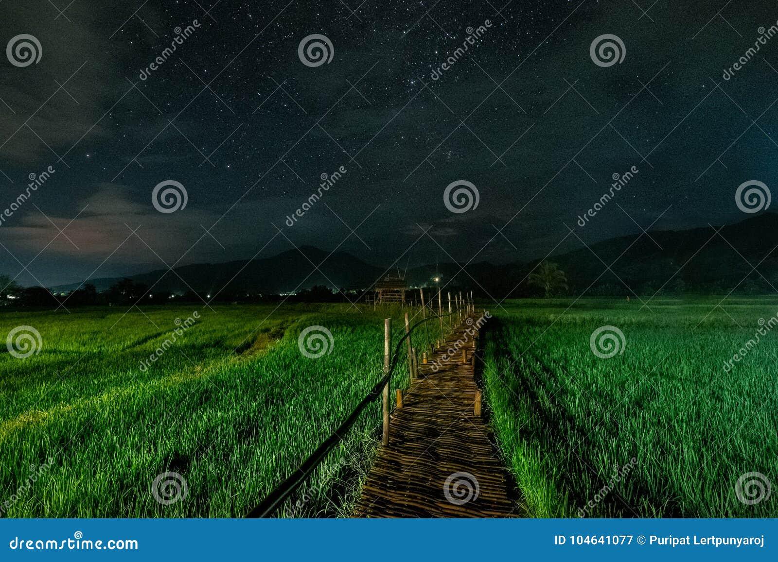 Download Groen Padieveld In Nan Province, Thailand Stock Afbeelding - Afbeelding bestaande uit nave, beroemd: 104641077