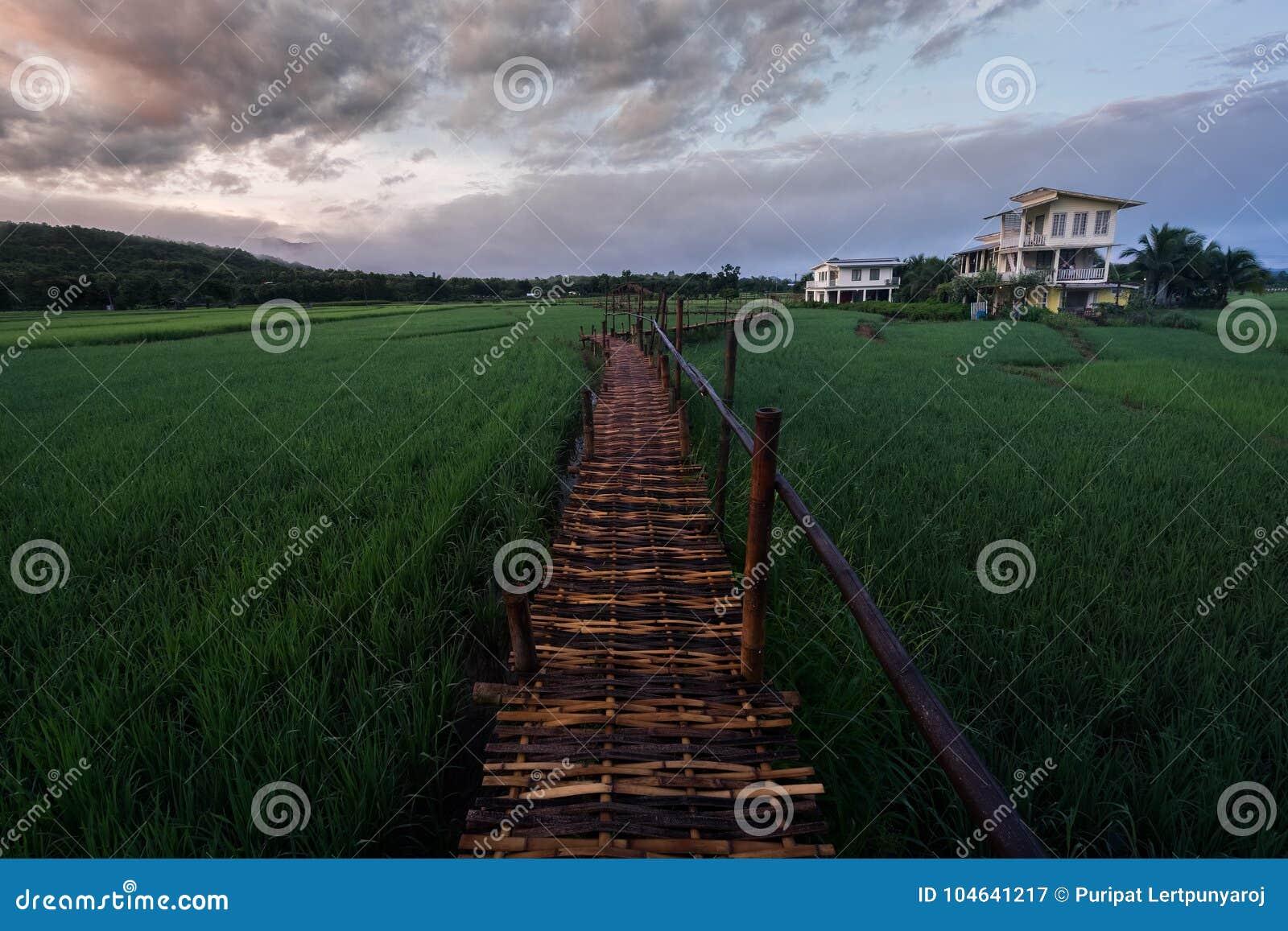 Download Groen Padieveld In Nan Province, Thailand Stock Afbeelding - Afbeelding bestaande uit strand, nave: 104641217