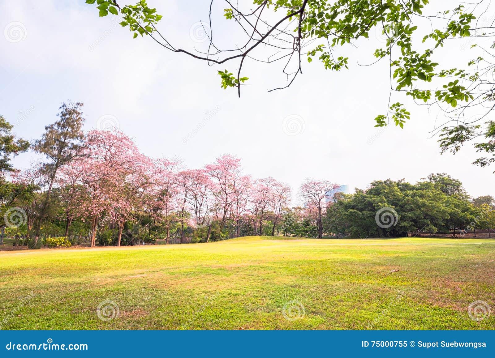 Groen parklandschap en grasgebied
