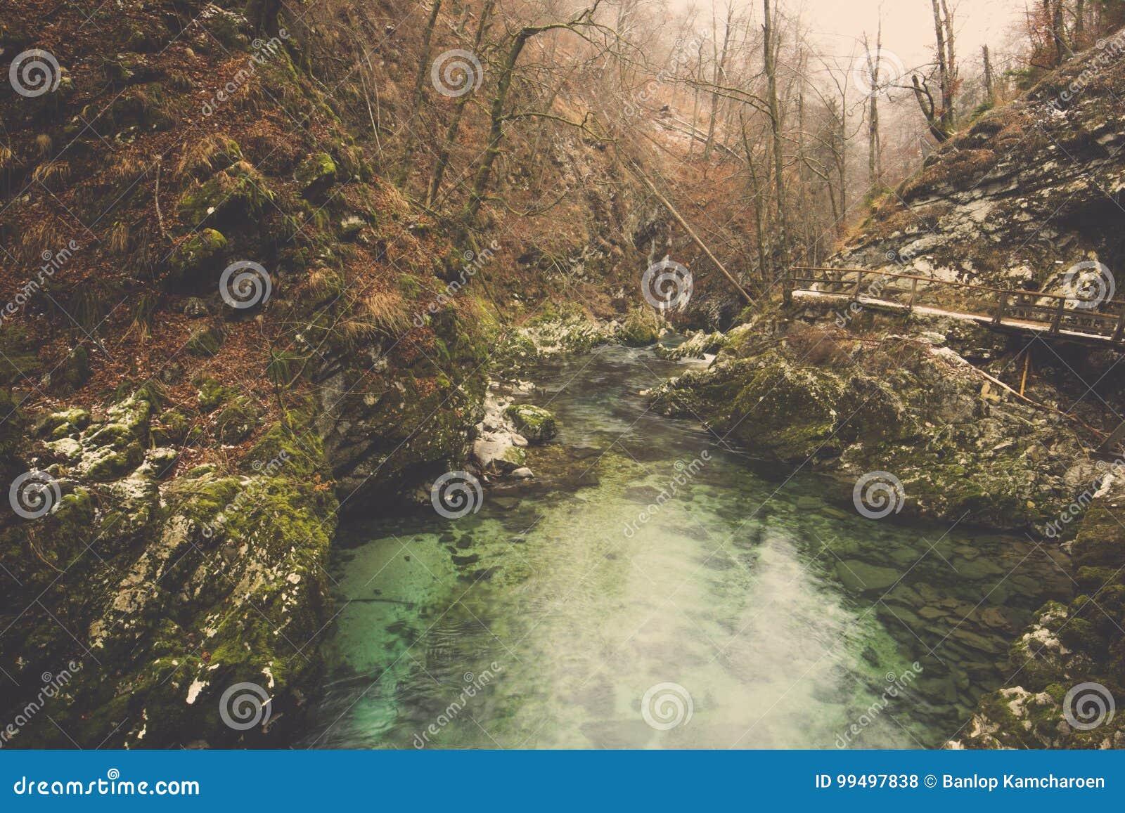 Groen stroomwater en bemost op rotsen in bos