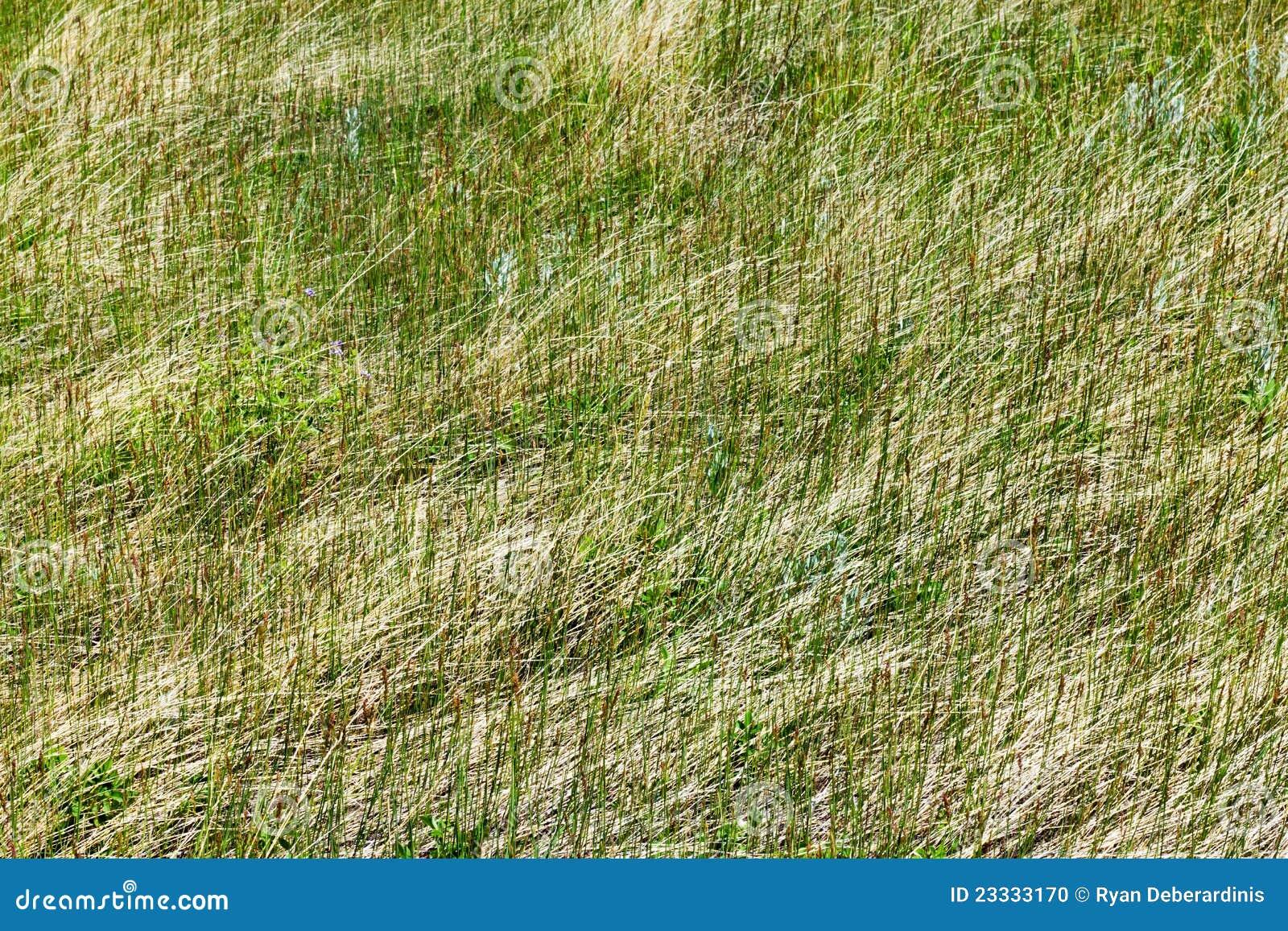 Groen van de textuur van het gras patroon als achtergrond stock foto afbeelding 23333170 - Groen behang van het water ...