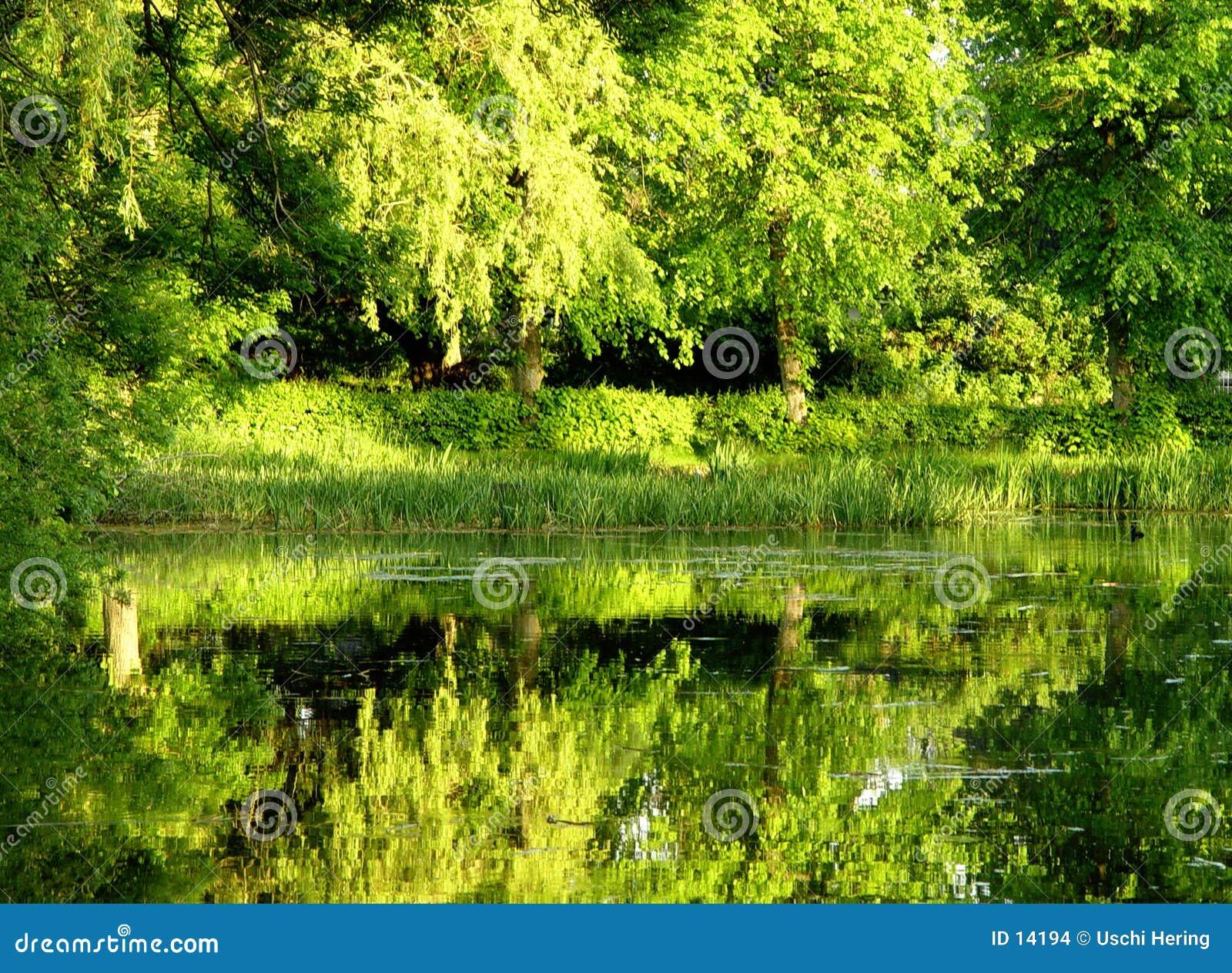 Groen water