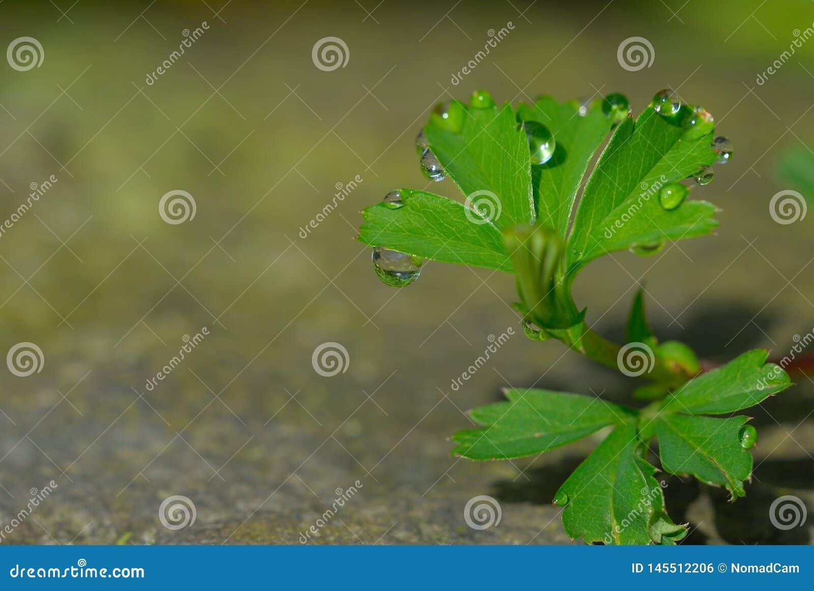 Groen weinig installatie met waterdalingen op een steen
