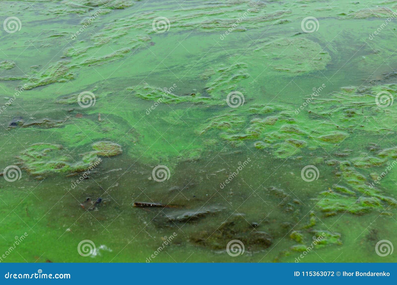 Groene algenverontreiniging op een waterspiegel