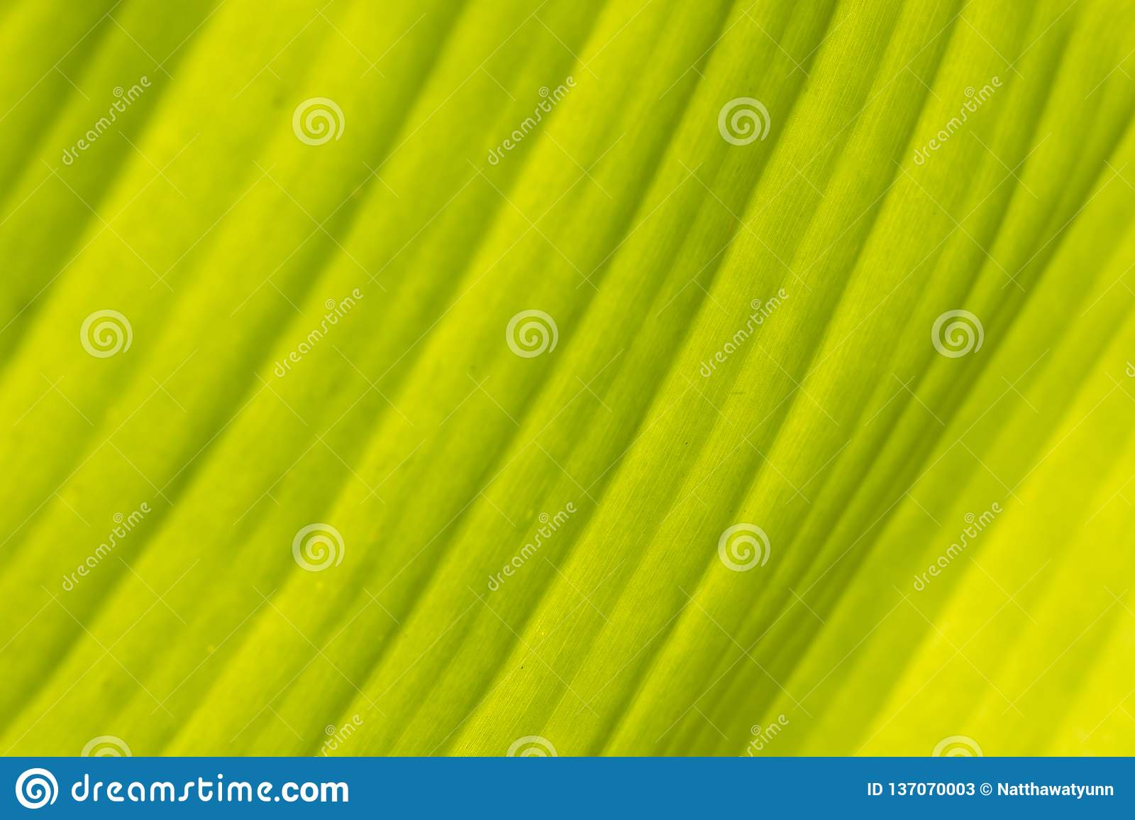 Groene banaanbladeren voor achtergrond