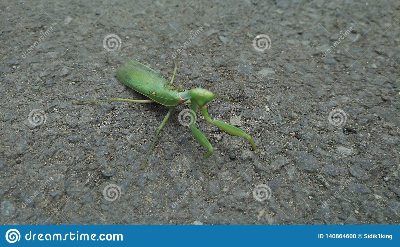 Groene bidsprinkhanen op de straat Onduidelijk beeld of vage achtergrond