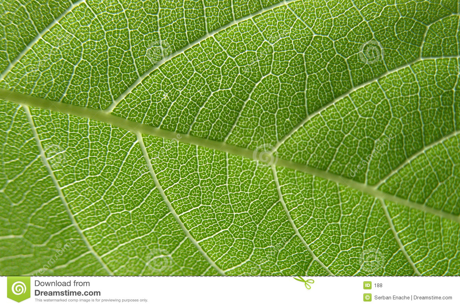 Groene bladclose-up 4