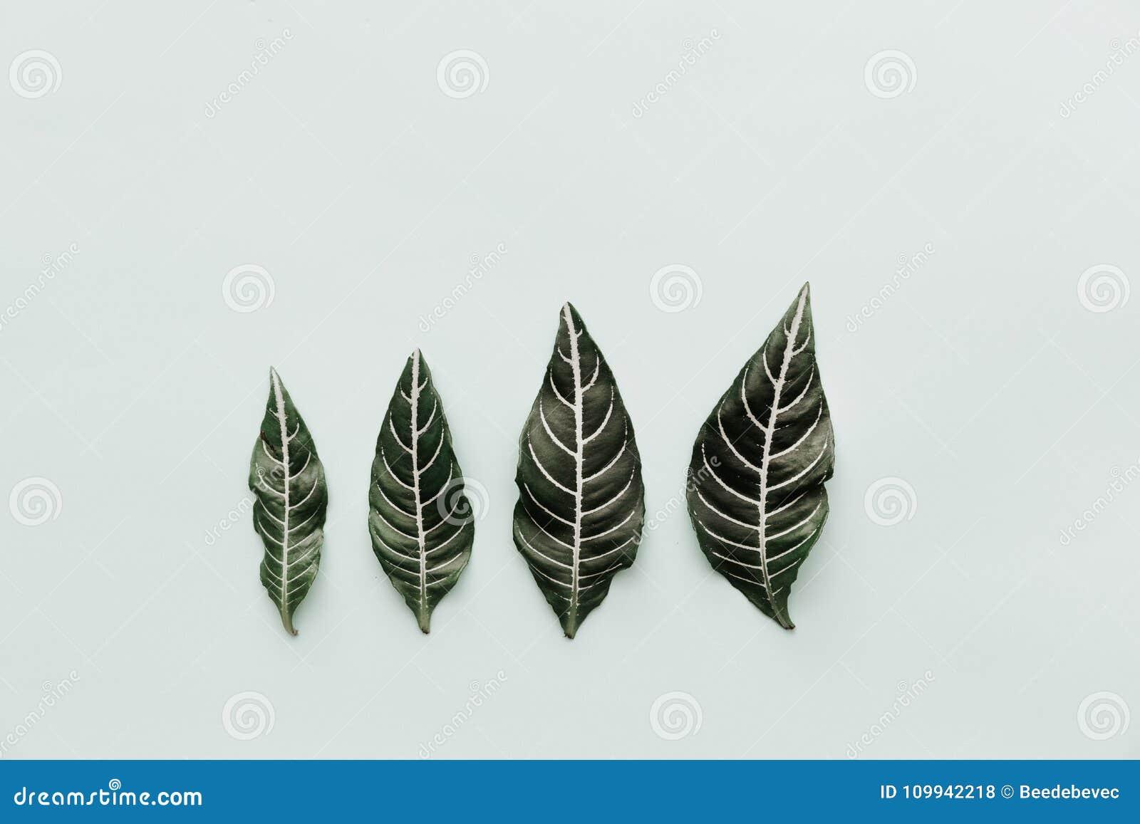 Groene Bladeren De neutrale Minimalistische Vlakte legt Scène met tropisch
