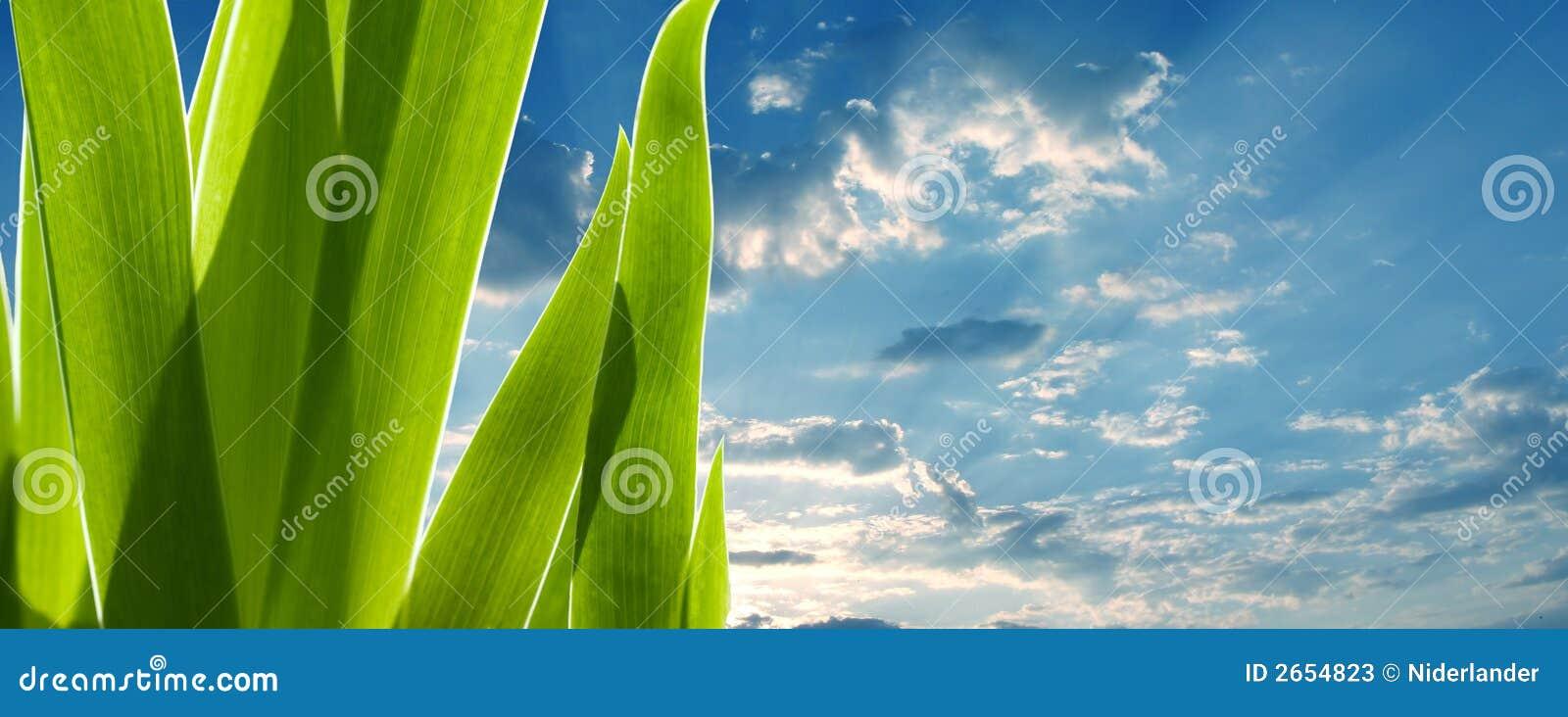 Groene bladeren en de hemel