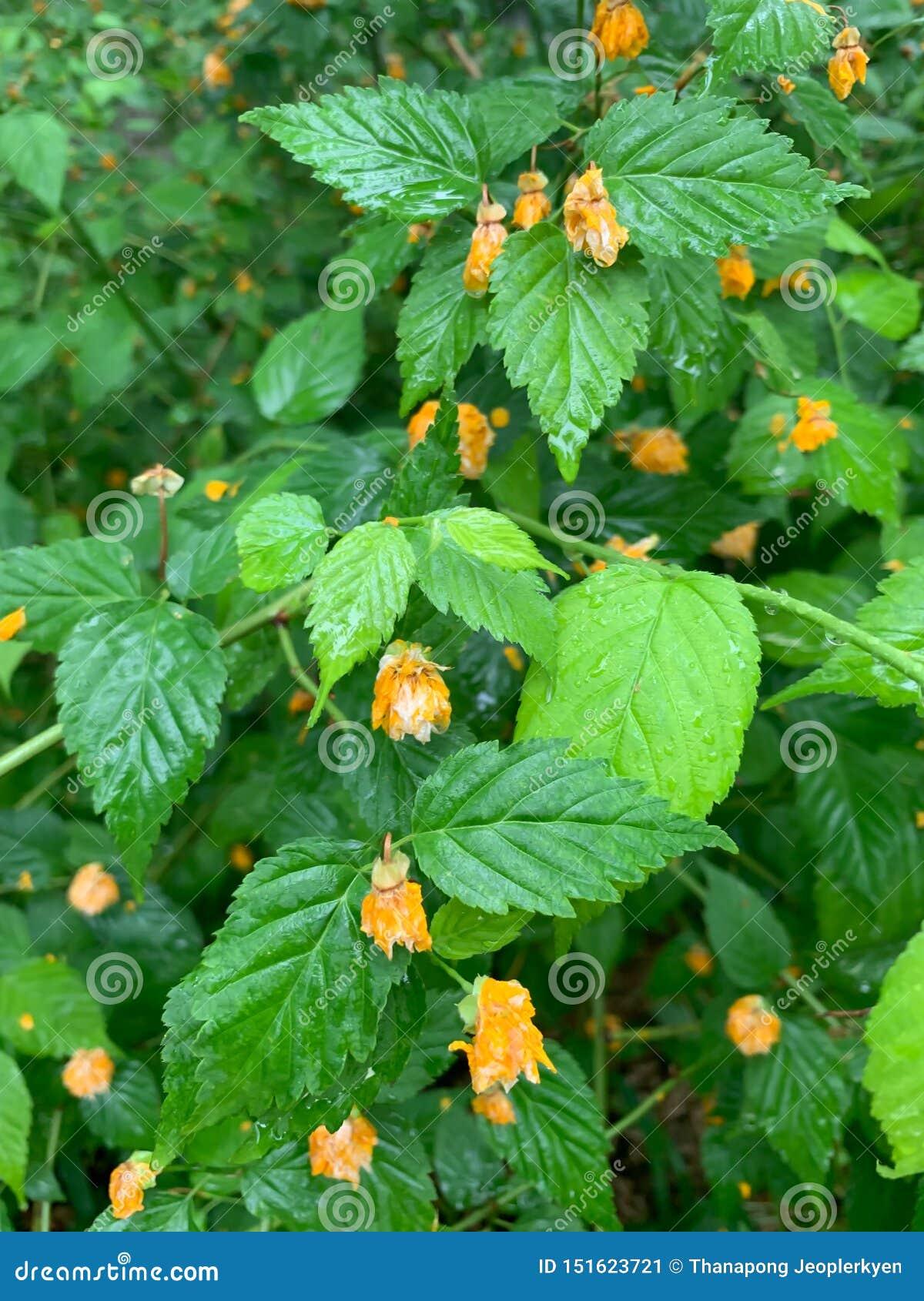 Groene bladeren en weinig gele bloemachtergrond