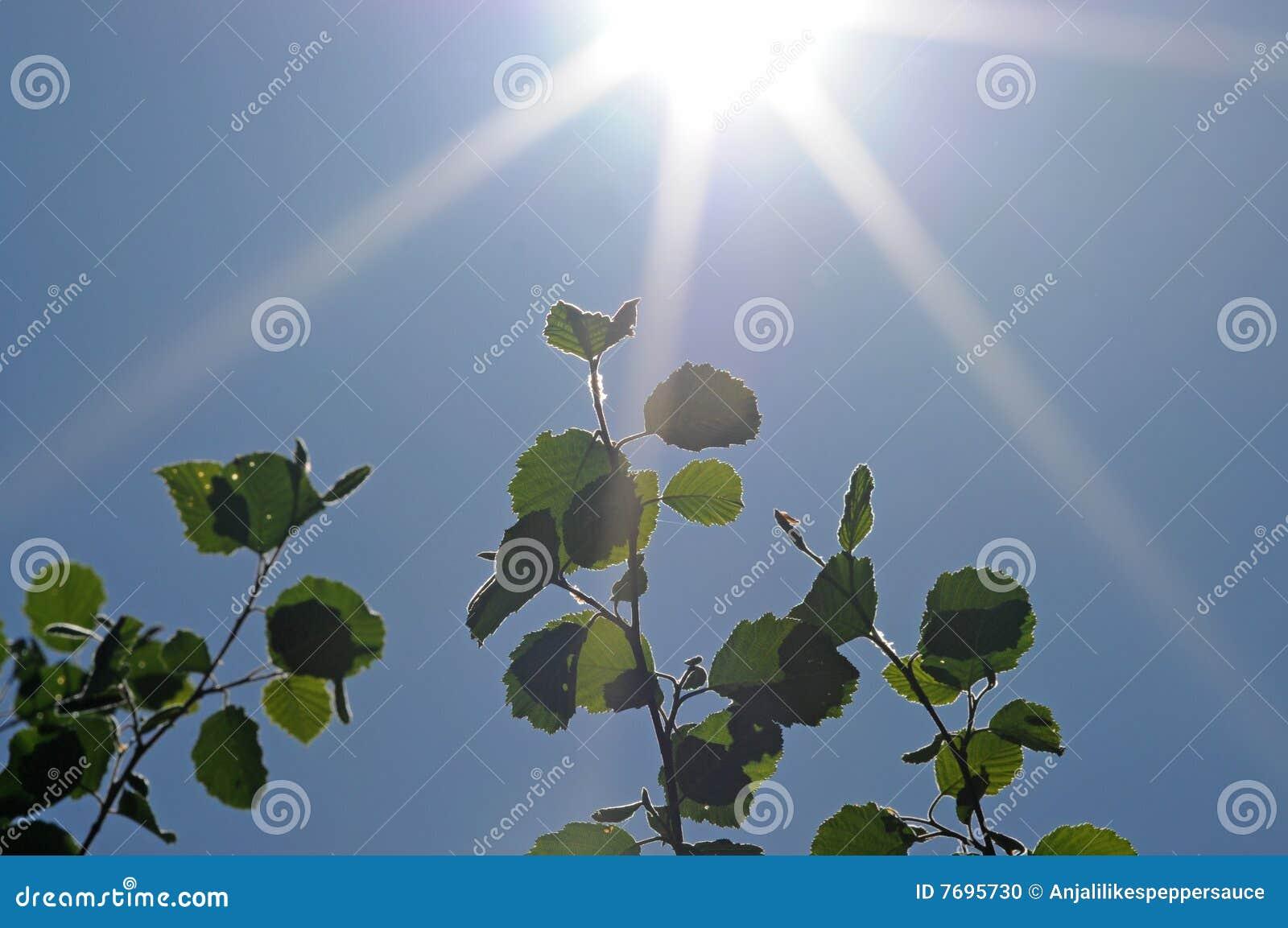Groene bladeren en zon