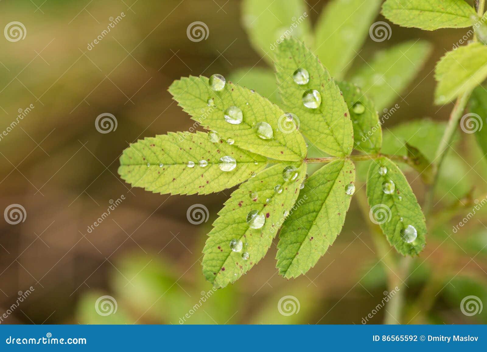 Groene bladeren met regendalingen