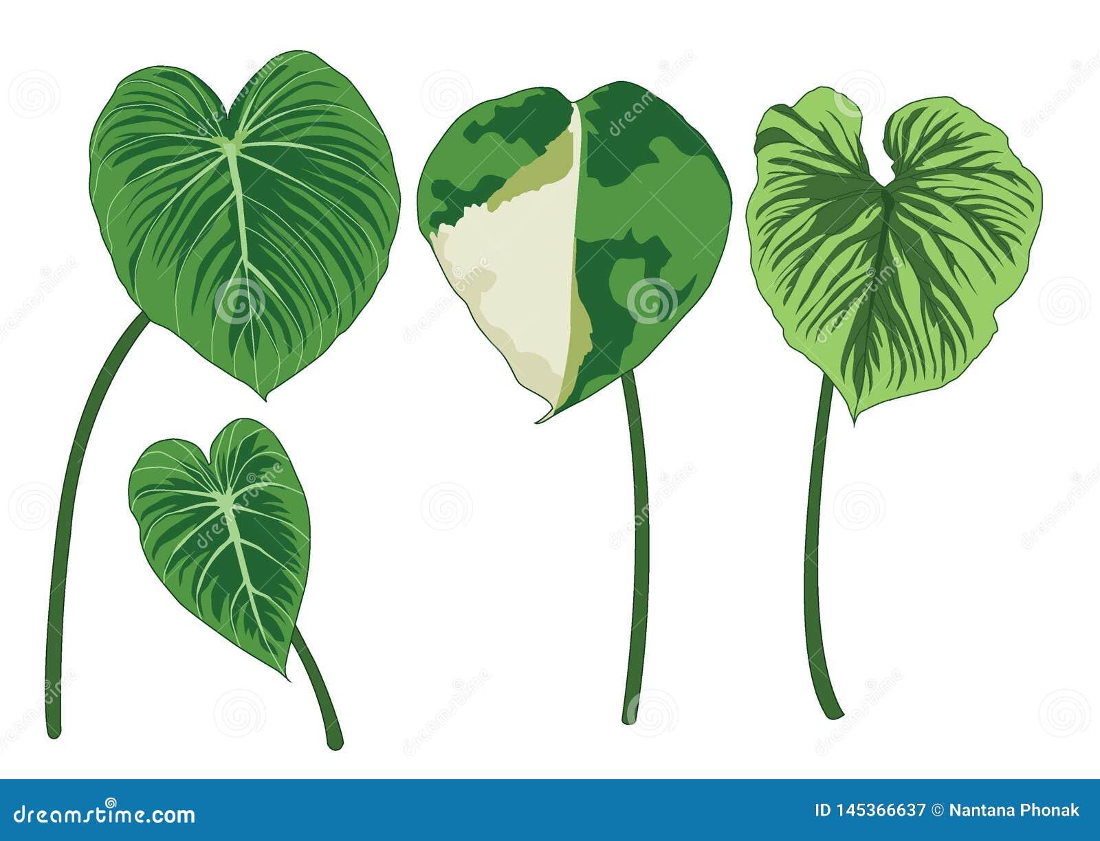 Groene Bladeren op witte illustratie als achtergrond