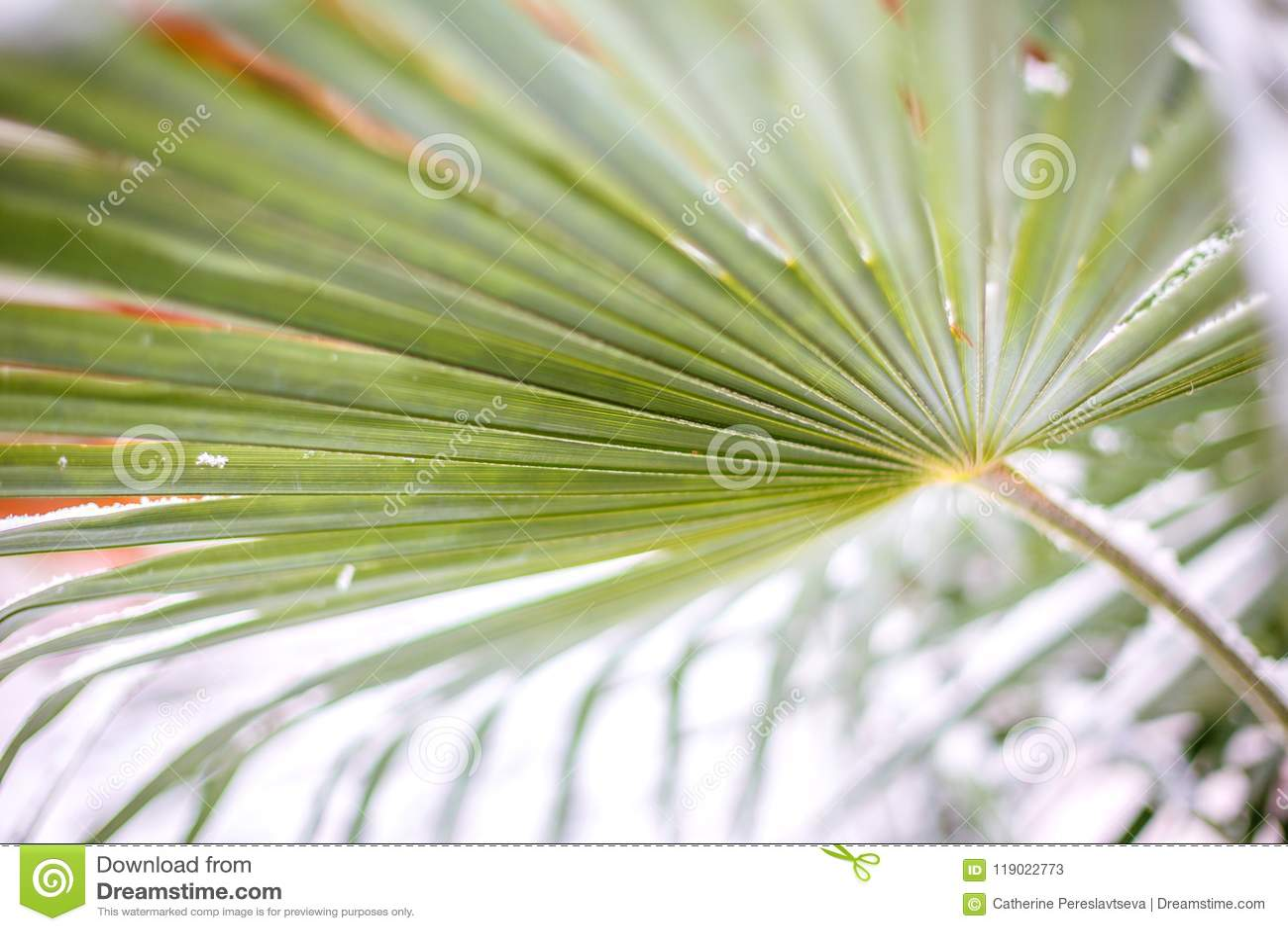 Groene bladpalmen in sneeuw