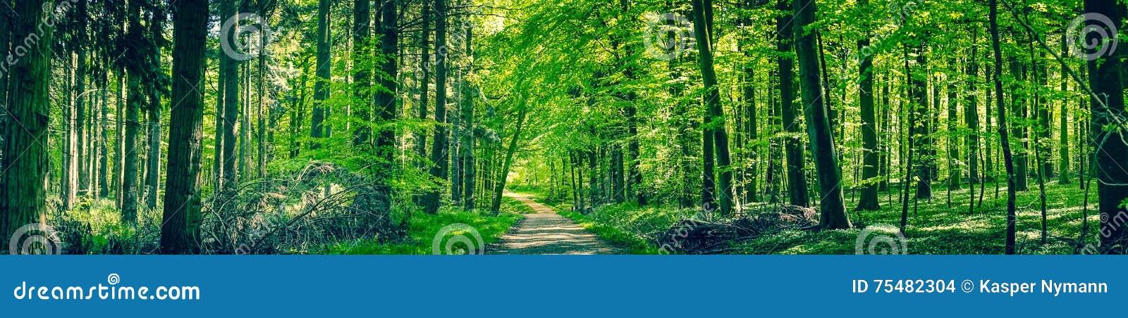 Groene bomen door een bosweg