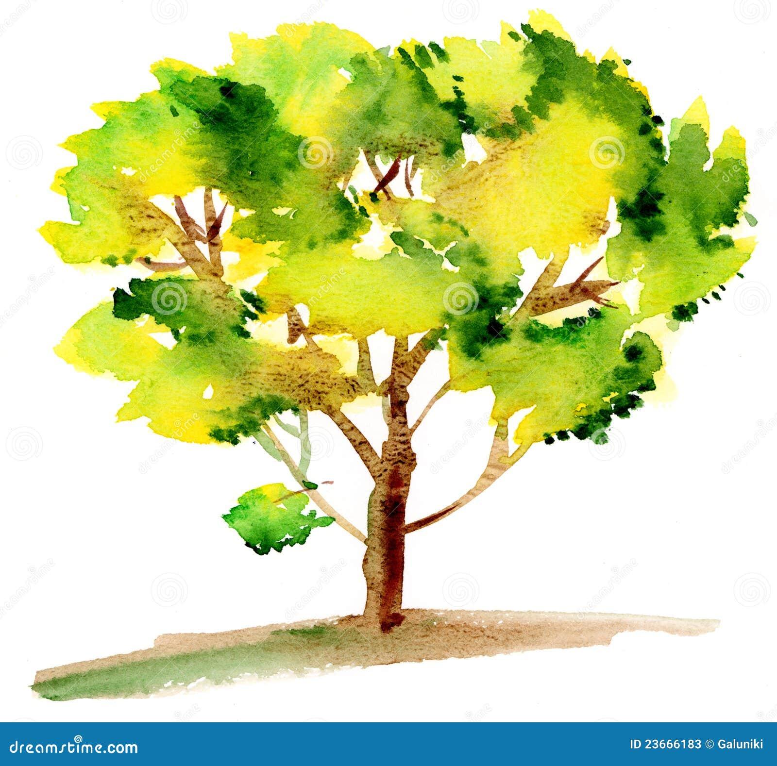 Groene boom stock foto 39 s afbeelding 23666183 - Smeedijzeren prieel leunde tegen ...