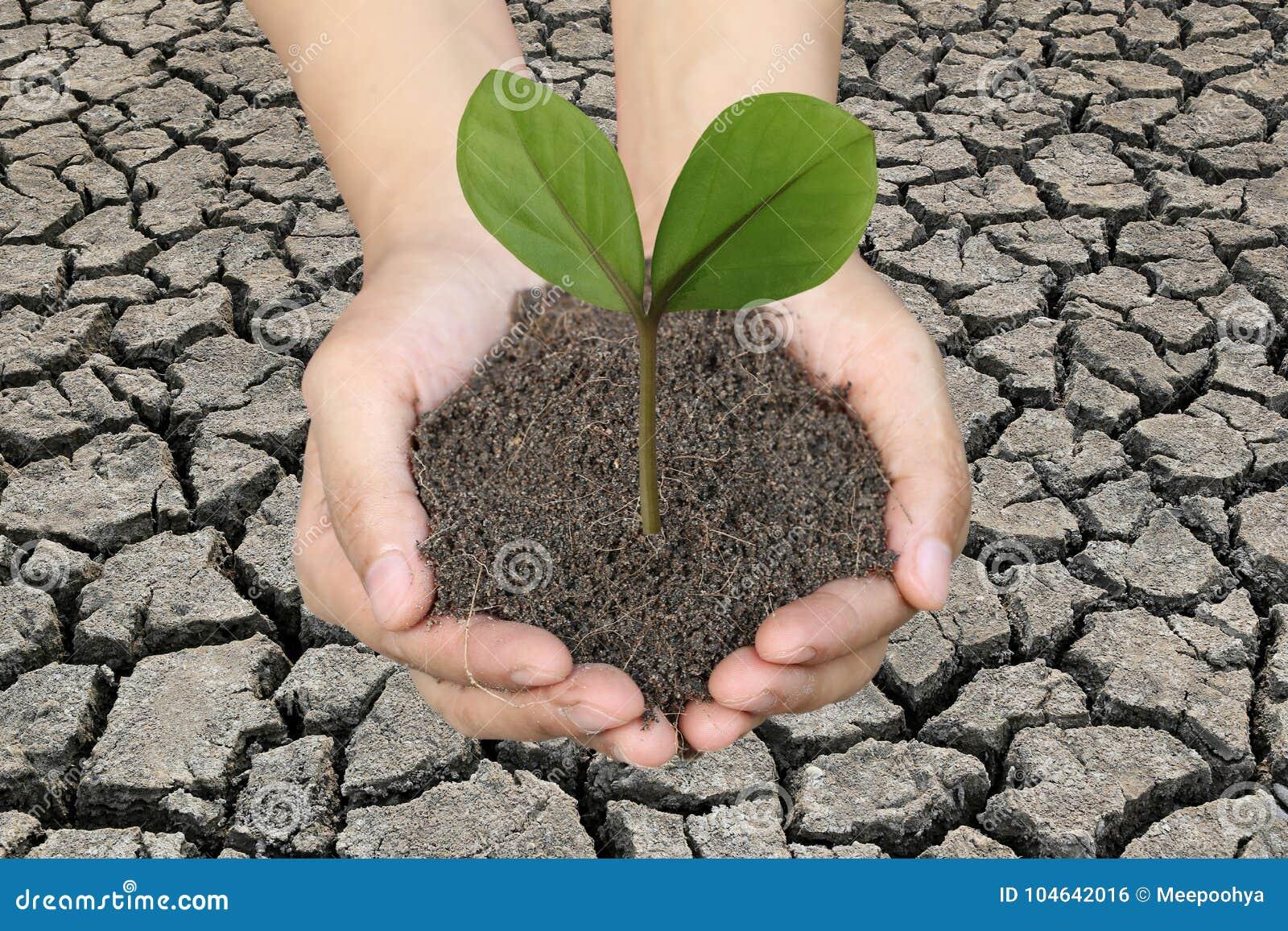 Download Groene Boom Ter Plaatse Op Mensenhanden En Droge Aardeachtergrond Stock Foto - Afbeelding bestaande uit organisch, fertilizing: 104642016