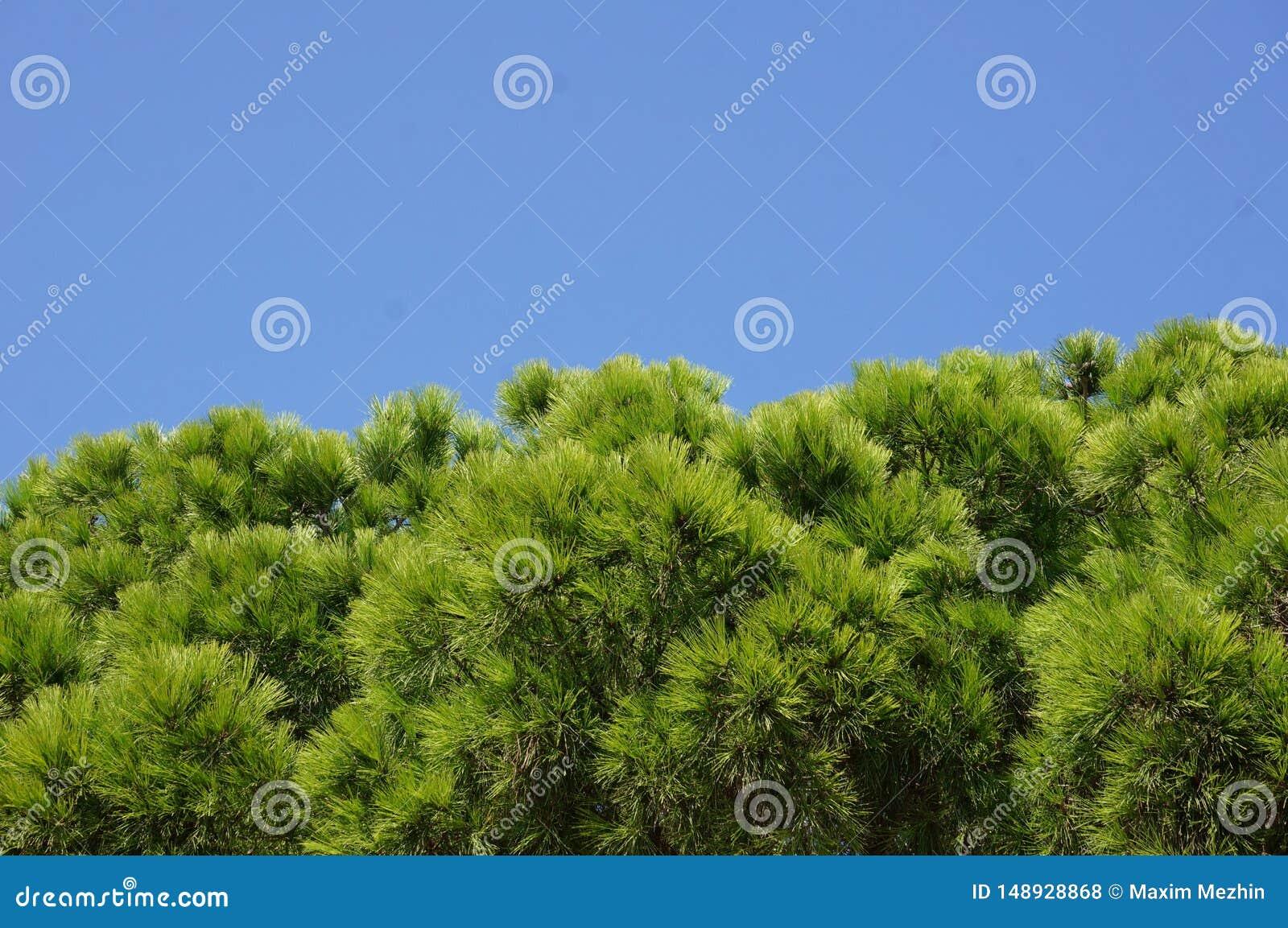 Groene boomtakken tegen de blauwe hemel