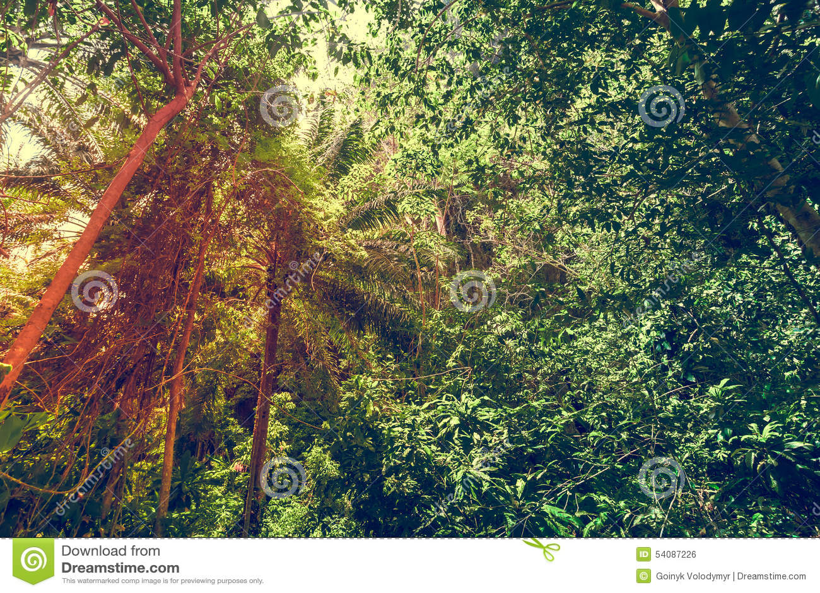 Groene bosachtergrond