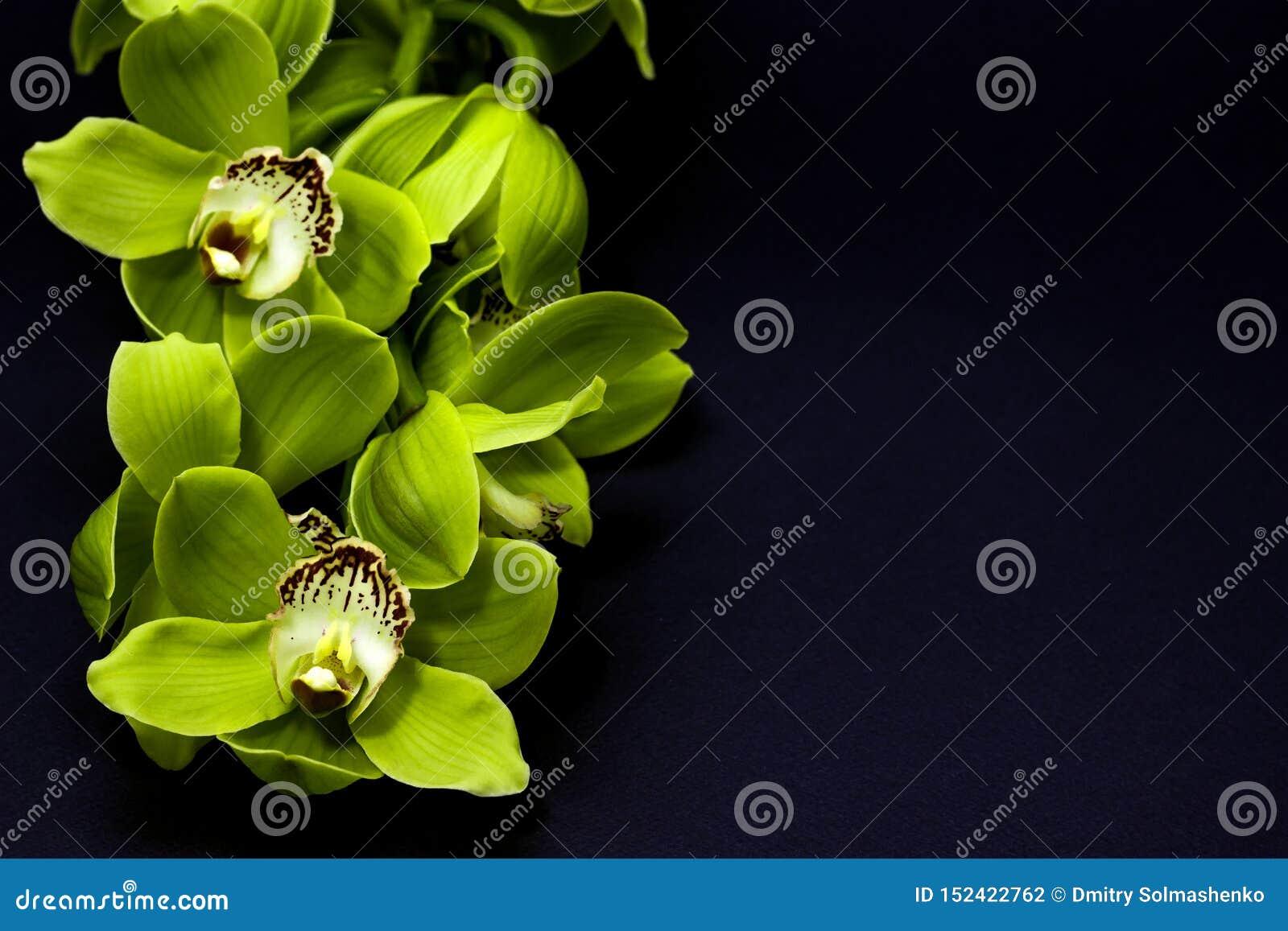 Groene Cymbidium-Orchidee op een zwarte achtergrond