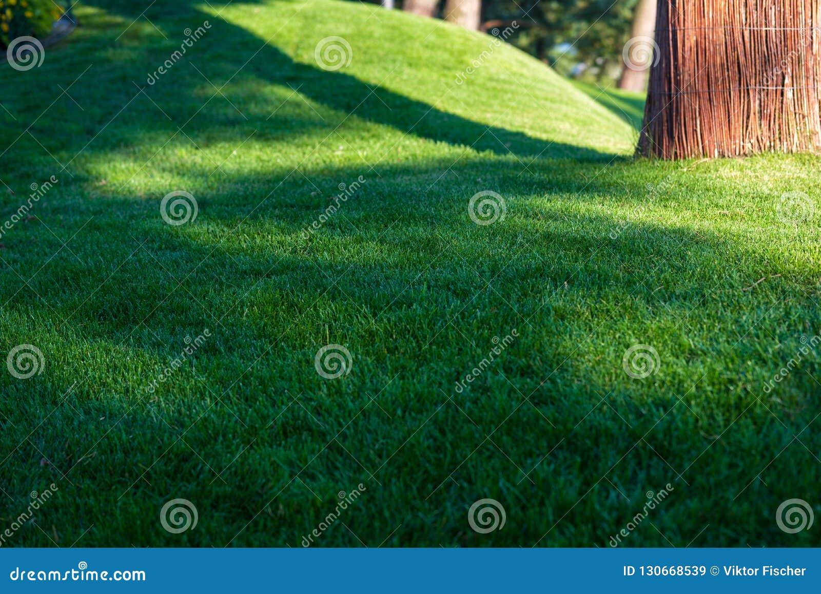 Groene decoratieve tuin Neutraal landschap met een groen gebied flowering boom