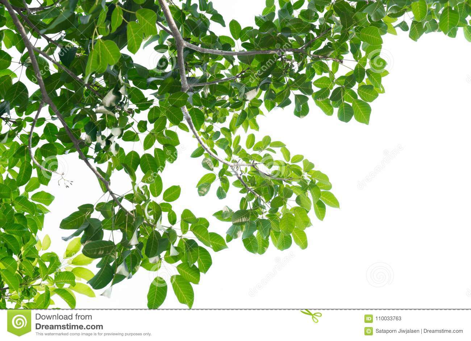 Groene die bladeren op white