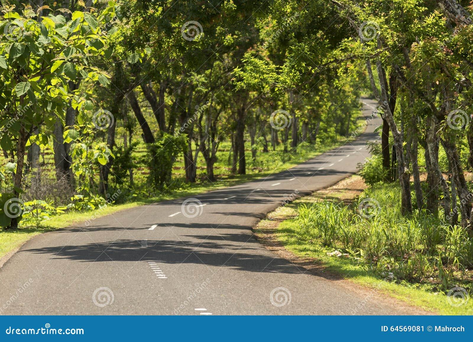 Groene die wegtunnel van bomen en installaties wordt gemaakt