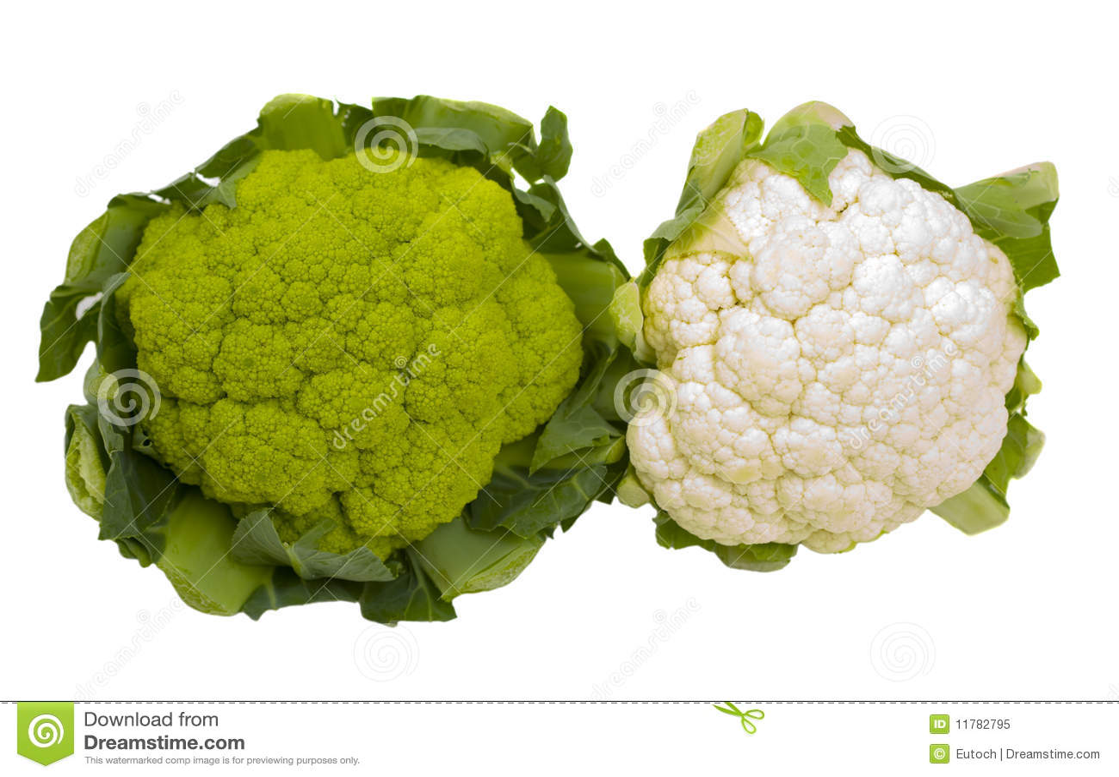 groene-en-witte-ge%C3%AFsoleerde-bloemko