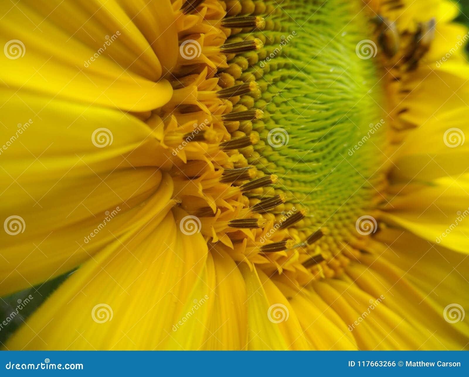 Groene Fibonacci