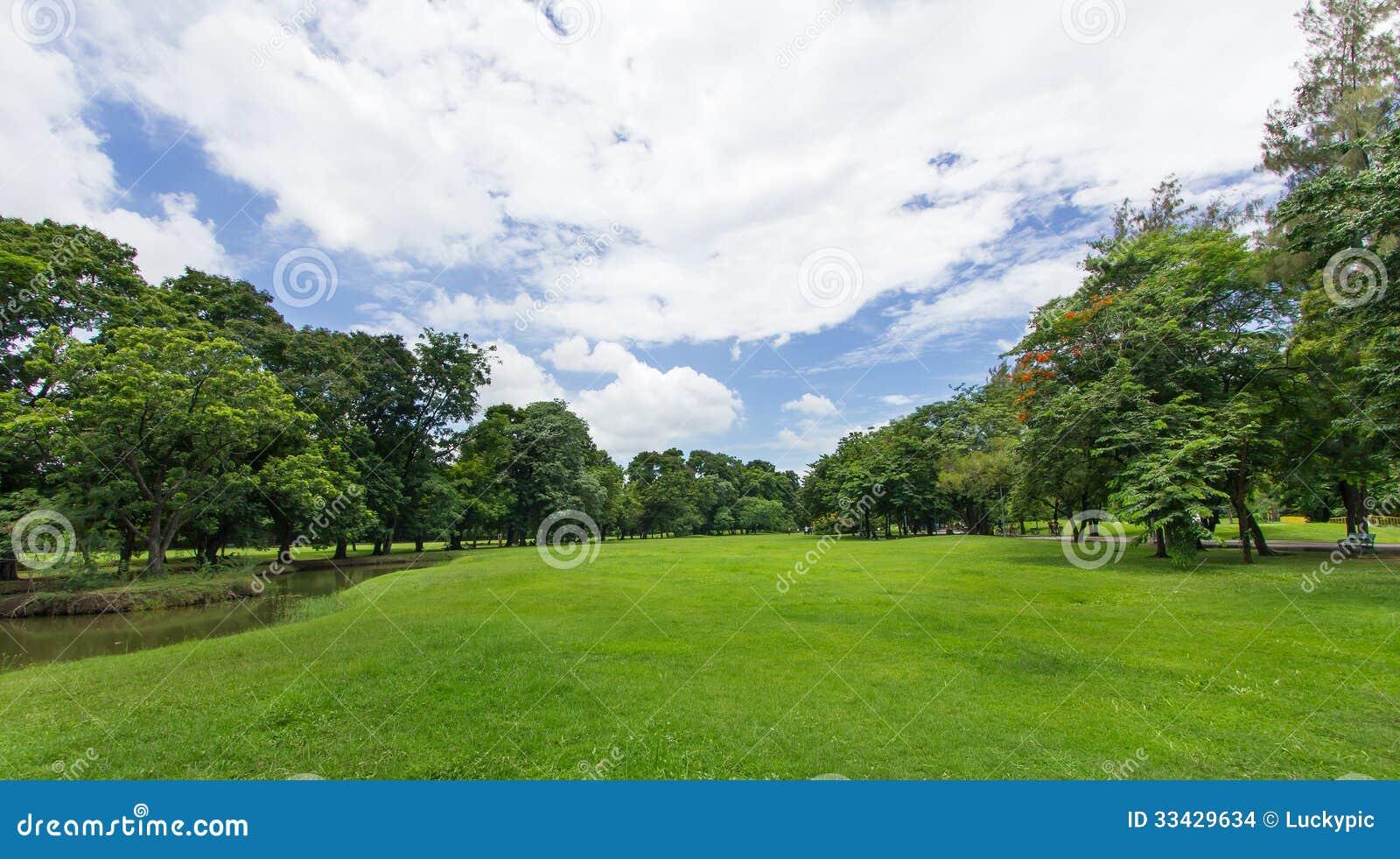 Groene Gazon en Bomen met blauwe hemel bij het openbare park