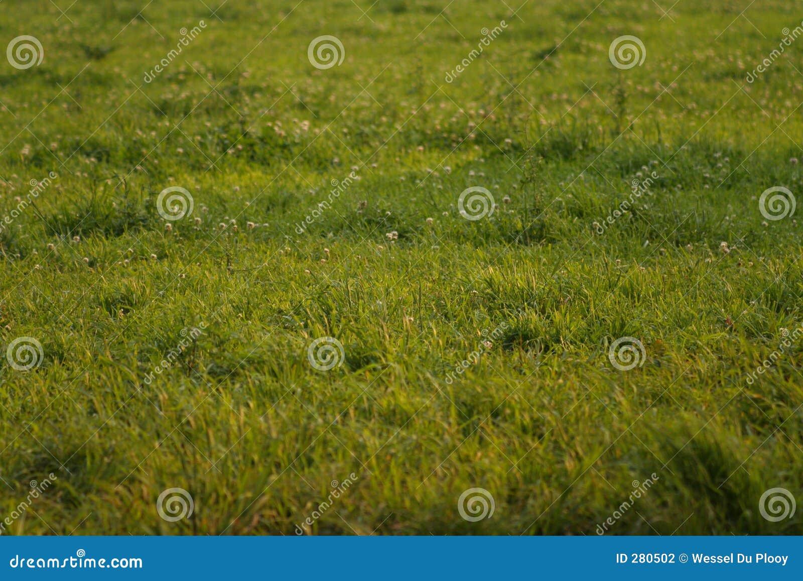 Groene gebieden