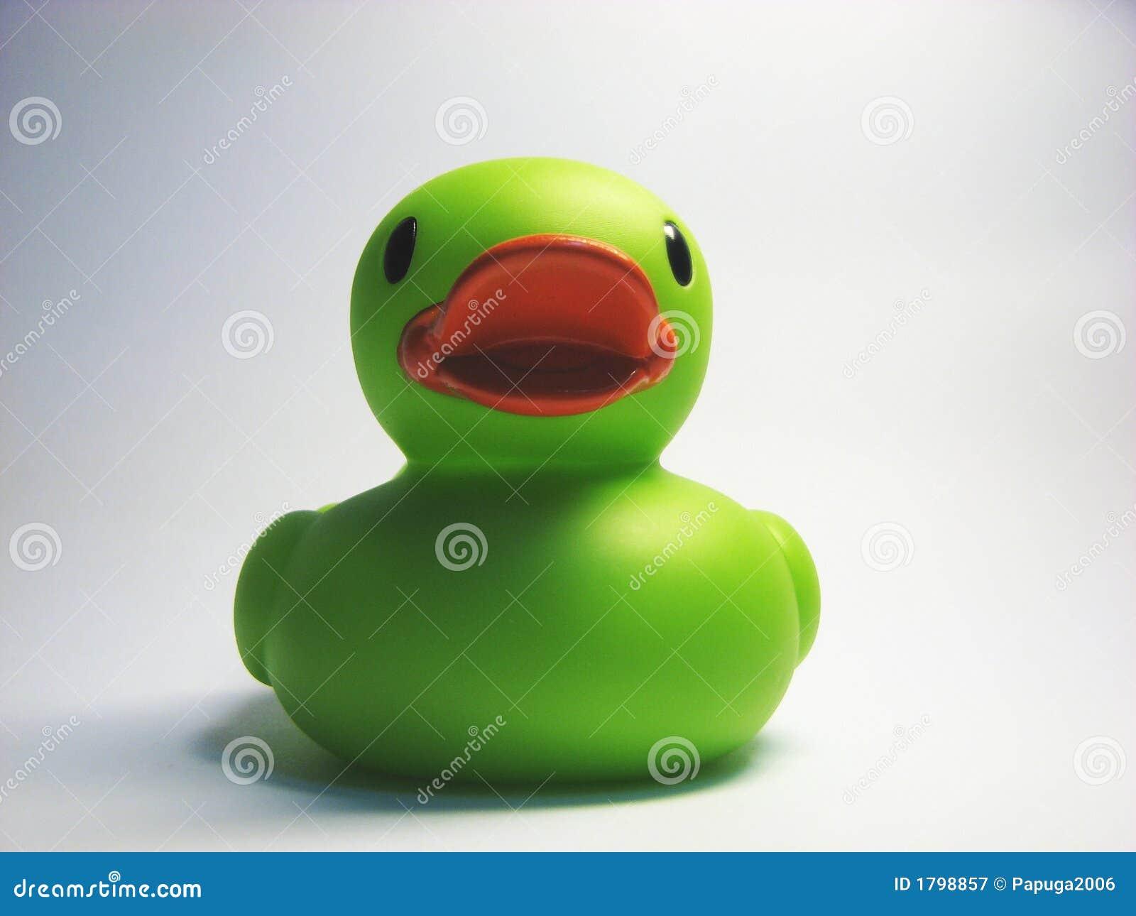 Groene gomeend 6