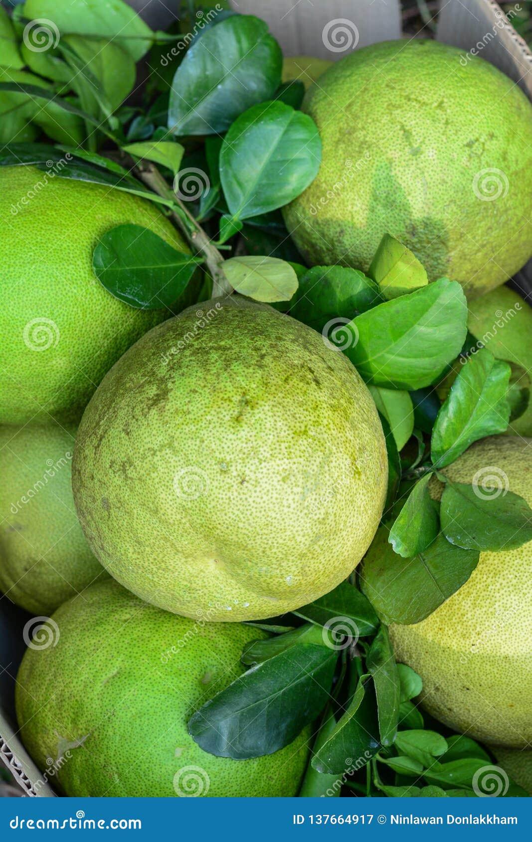 Groene grapefruit bij markt