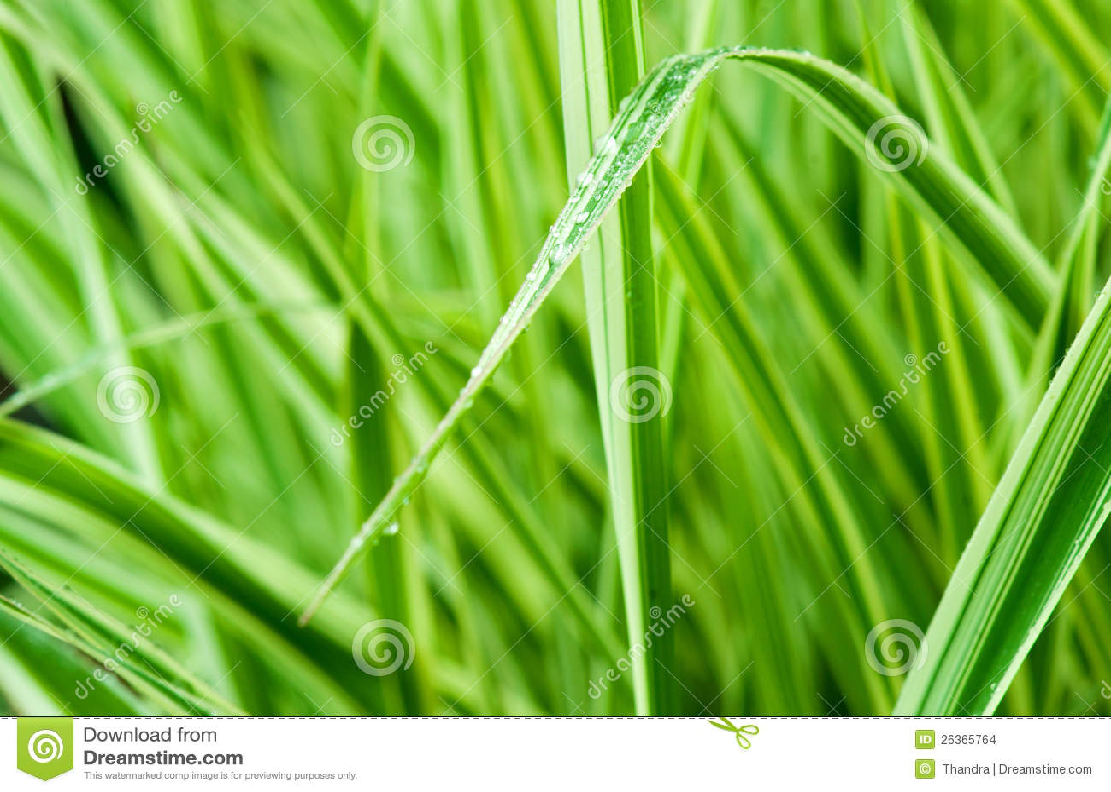 Groene gras macro dichte omhooggaand