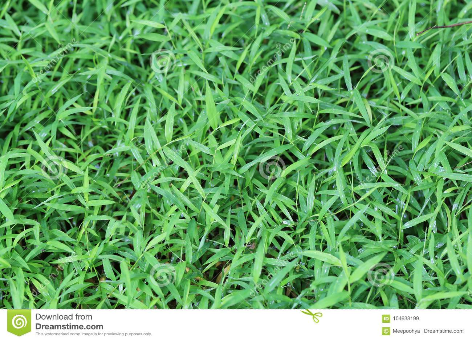 Download Groene grasachtergrond stock afbeelding. Afbeelding bestaande uit landschap - 104633199