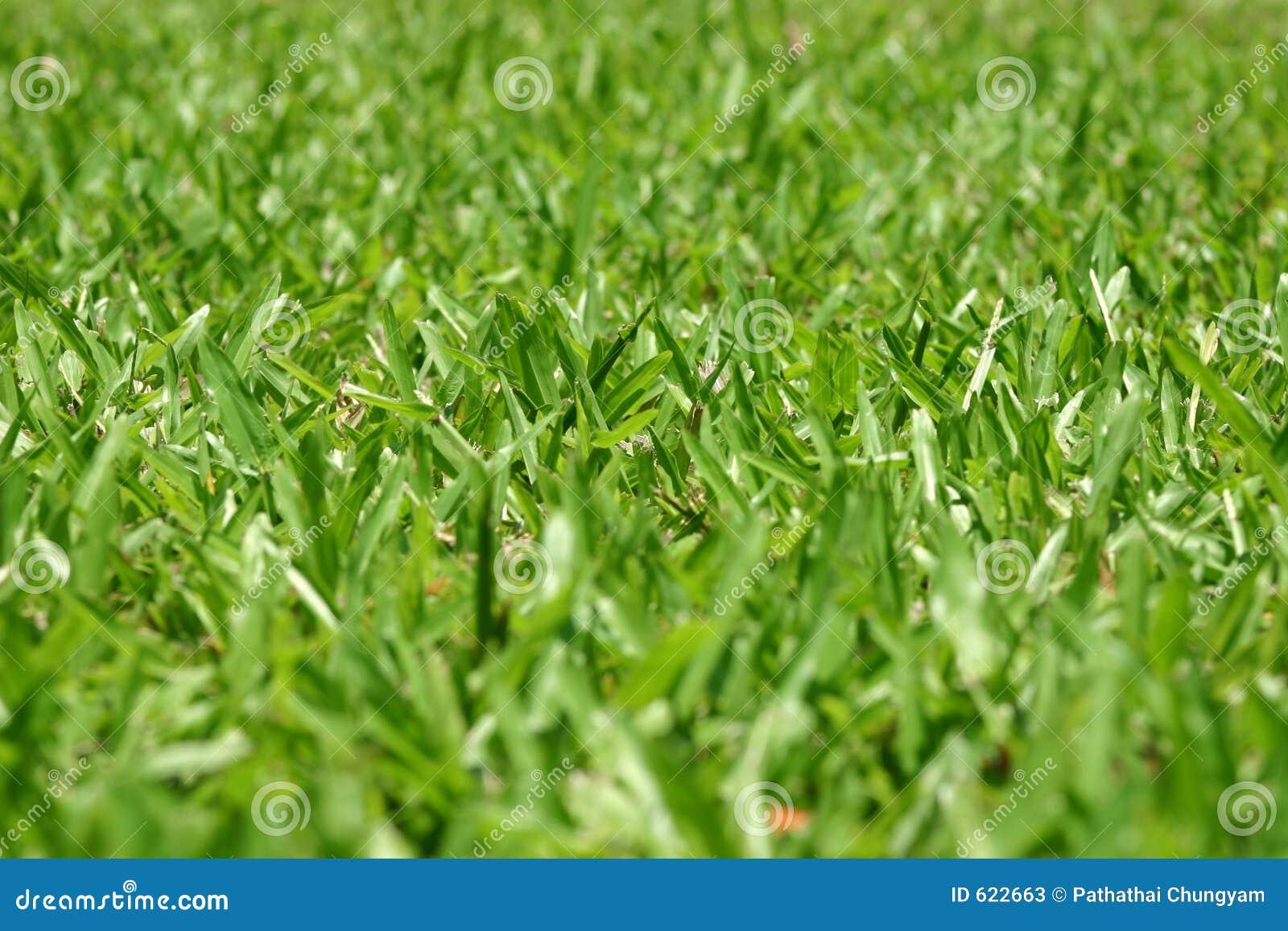Groene grasachtergrond